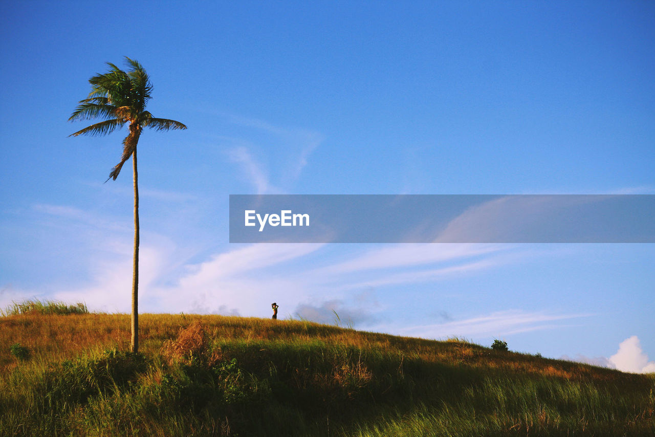 Palm tree on hill