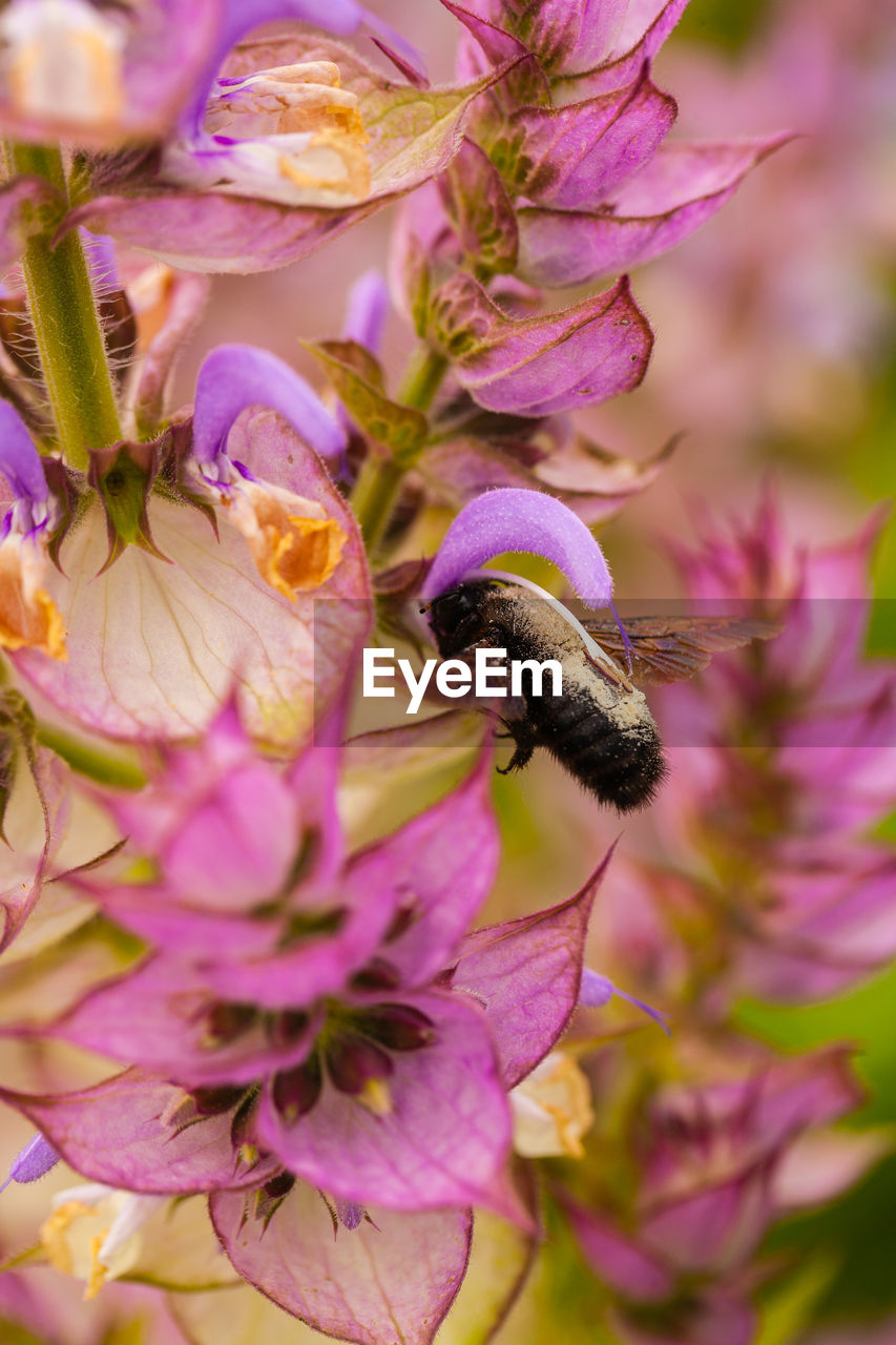 flowering plant, flower, fragility, plant, beauty in nature, vulnerability, petal, freshness, growth, one animal, close-up, invertebrate, animal, animal themes, animals in the wild, animal wildlife, insect, purple, flower head, nature, no people, pink color, pollination, outdoors