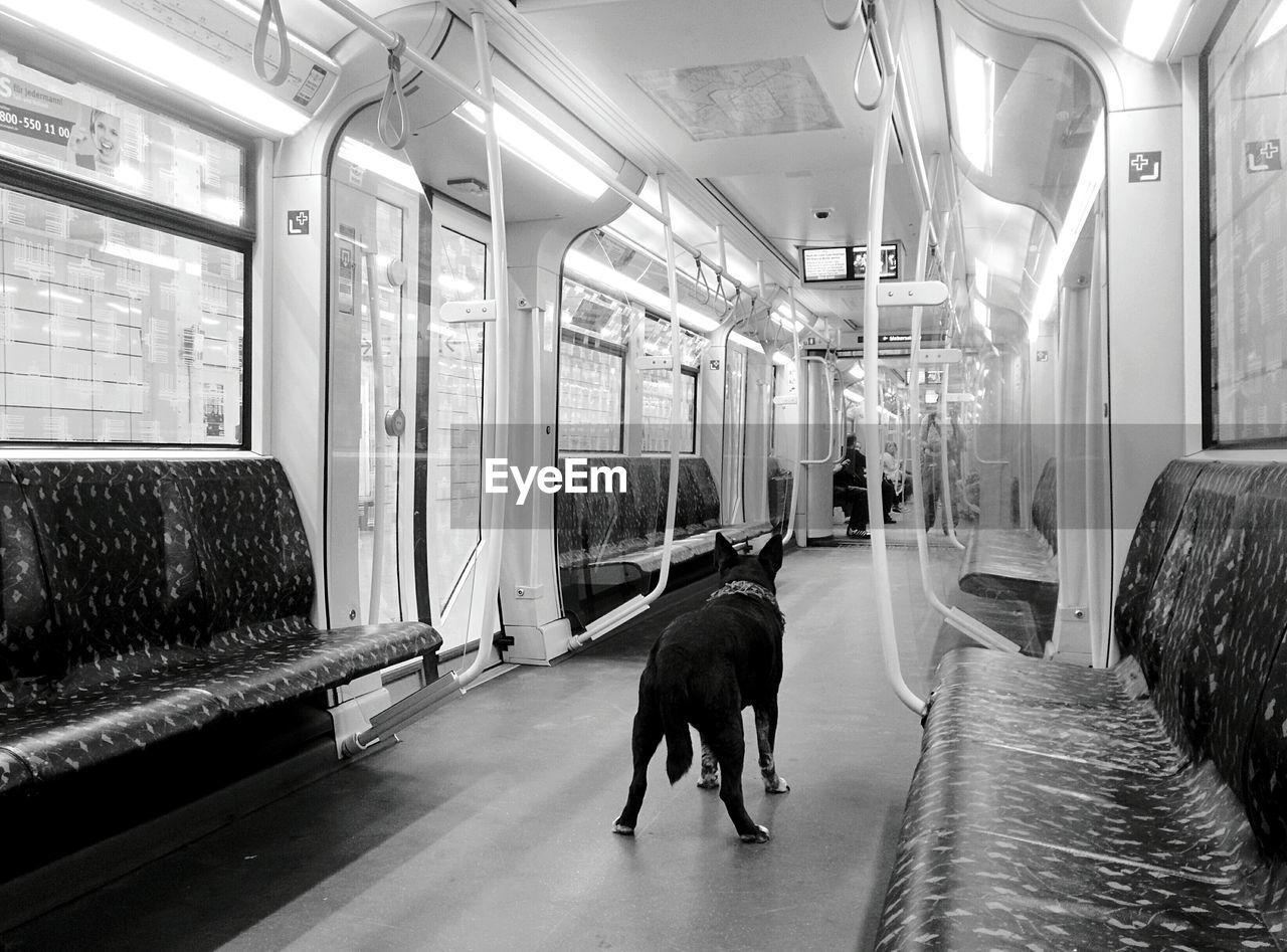dog, indoors, domestic animals, animal themes, train - vehicle, mammal, pets, no people, vehicle seat, day