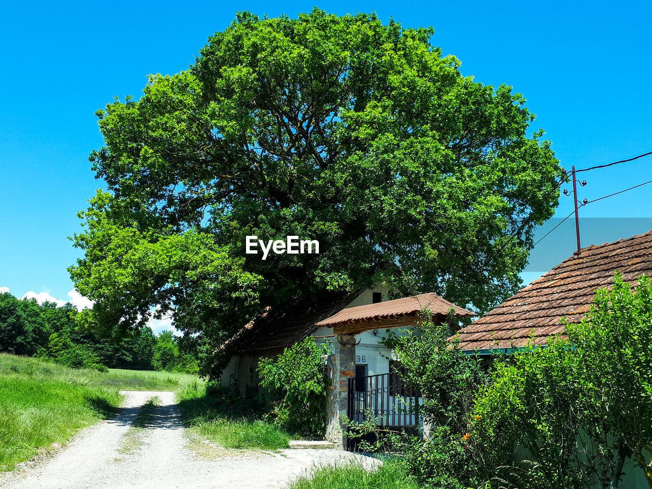 TREE BY ROAD AGAINST BUILDINGS