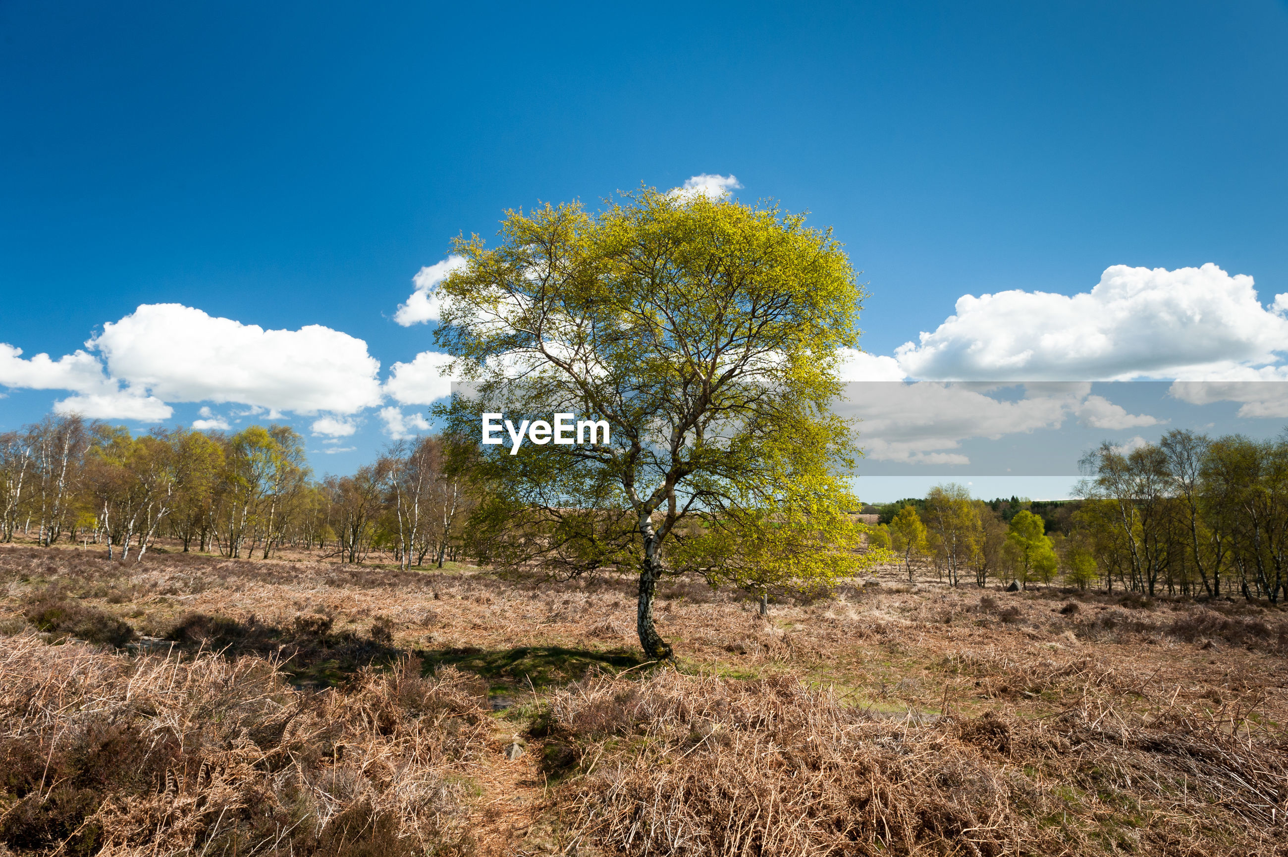 VIEW OF TREES ON FIELD AGAINST BLUE SKY