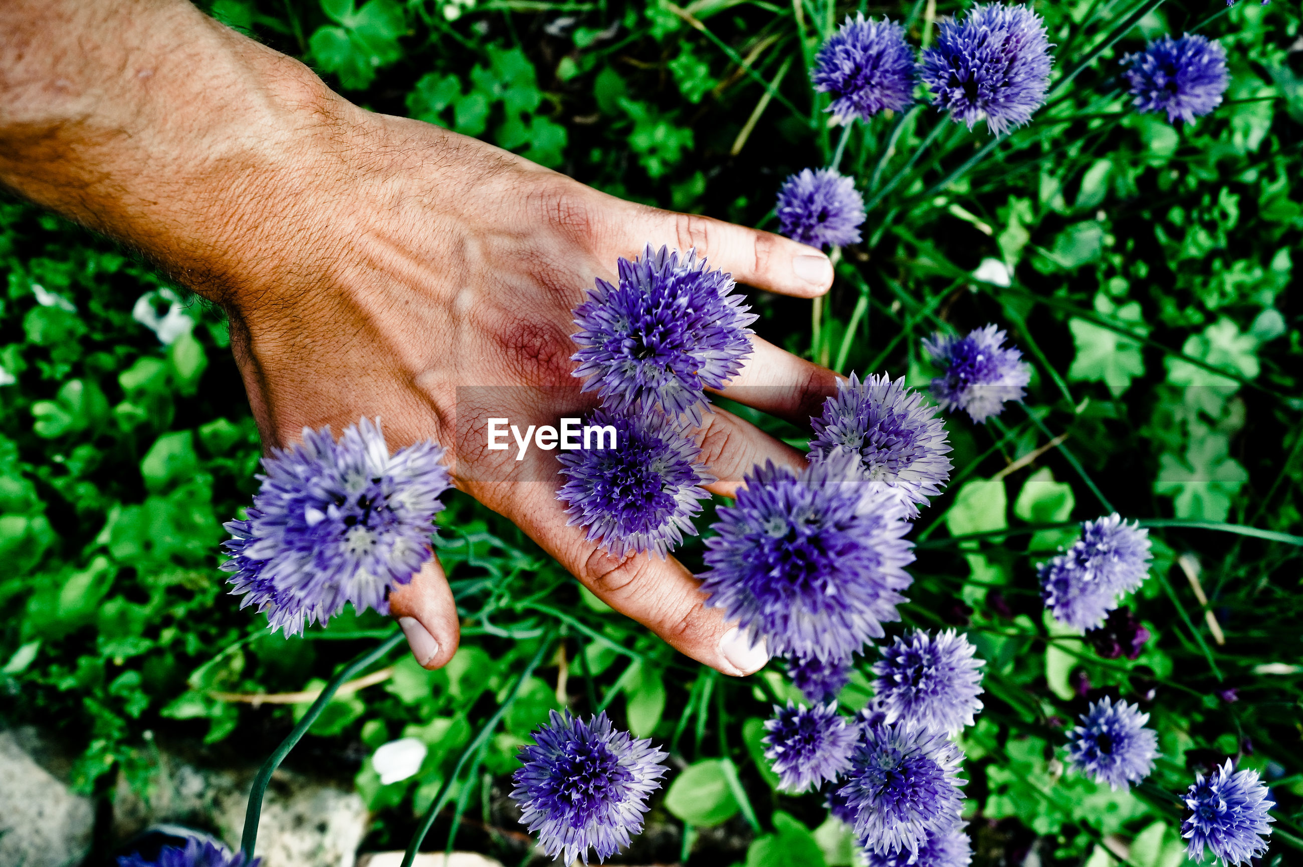 Close-up of a hand touching flowers