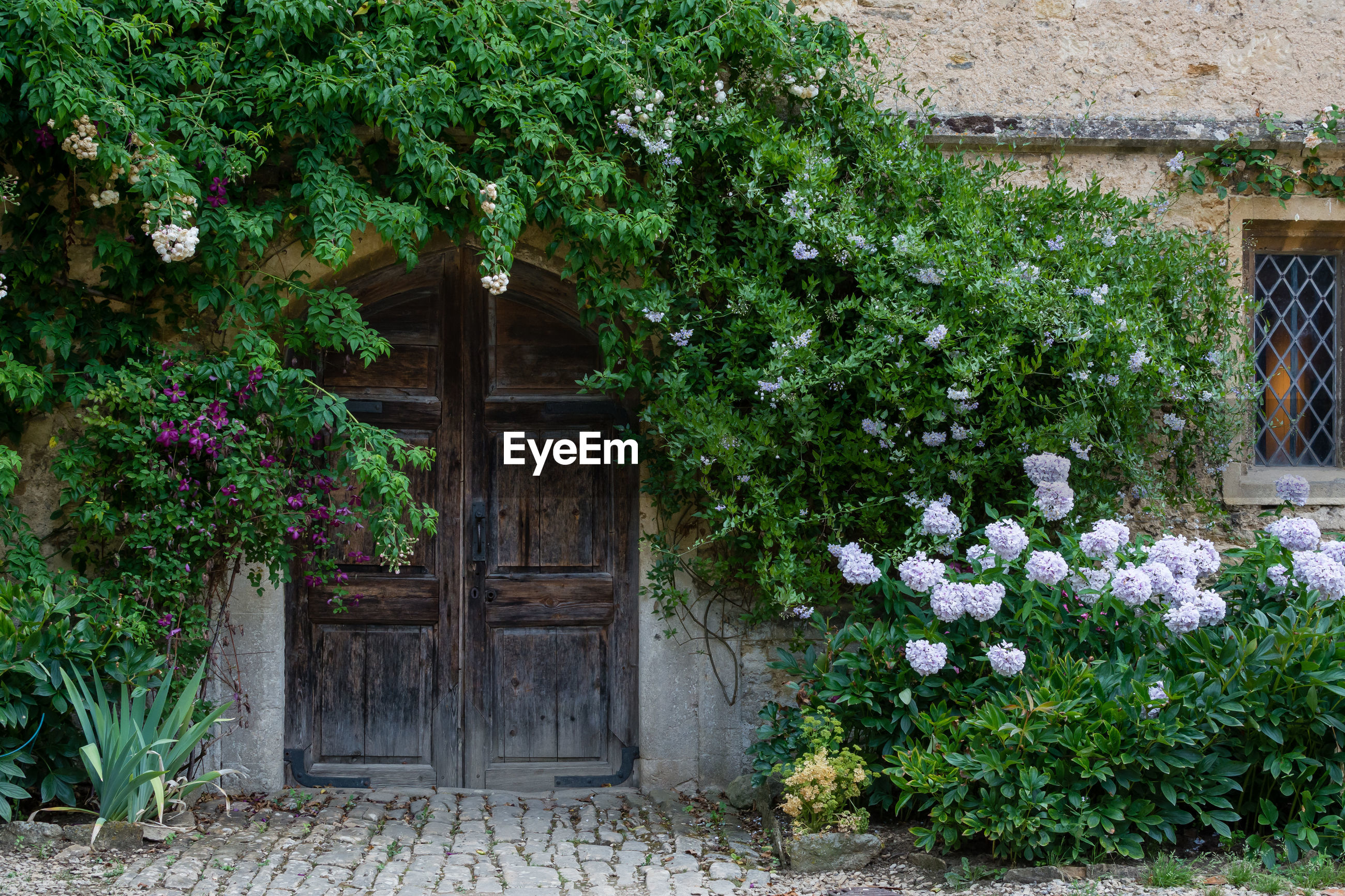 FLOWERING PLANTS AND TREES BY HOUSE