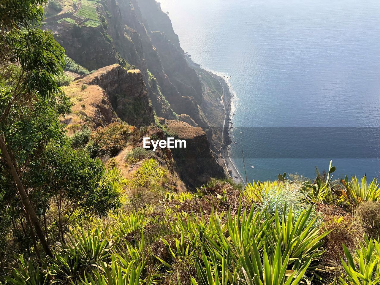 water, plant, beauty in nature, sea, scenics - nature, tranquil scene, tranquility, nature, growth, land, high angle view, cliff, day, no people, mountain, outdoors, idyllic, non-urban scene, grass