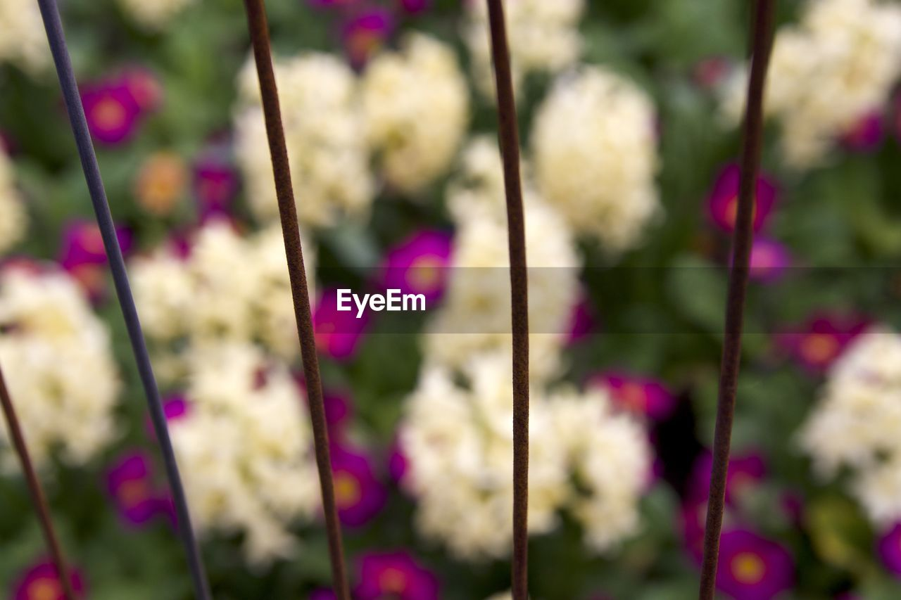 focus on foreground, no people, nature, growth, close-up, purple, day, beauty in nature, outdoors, fragility