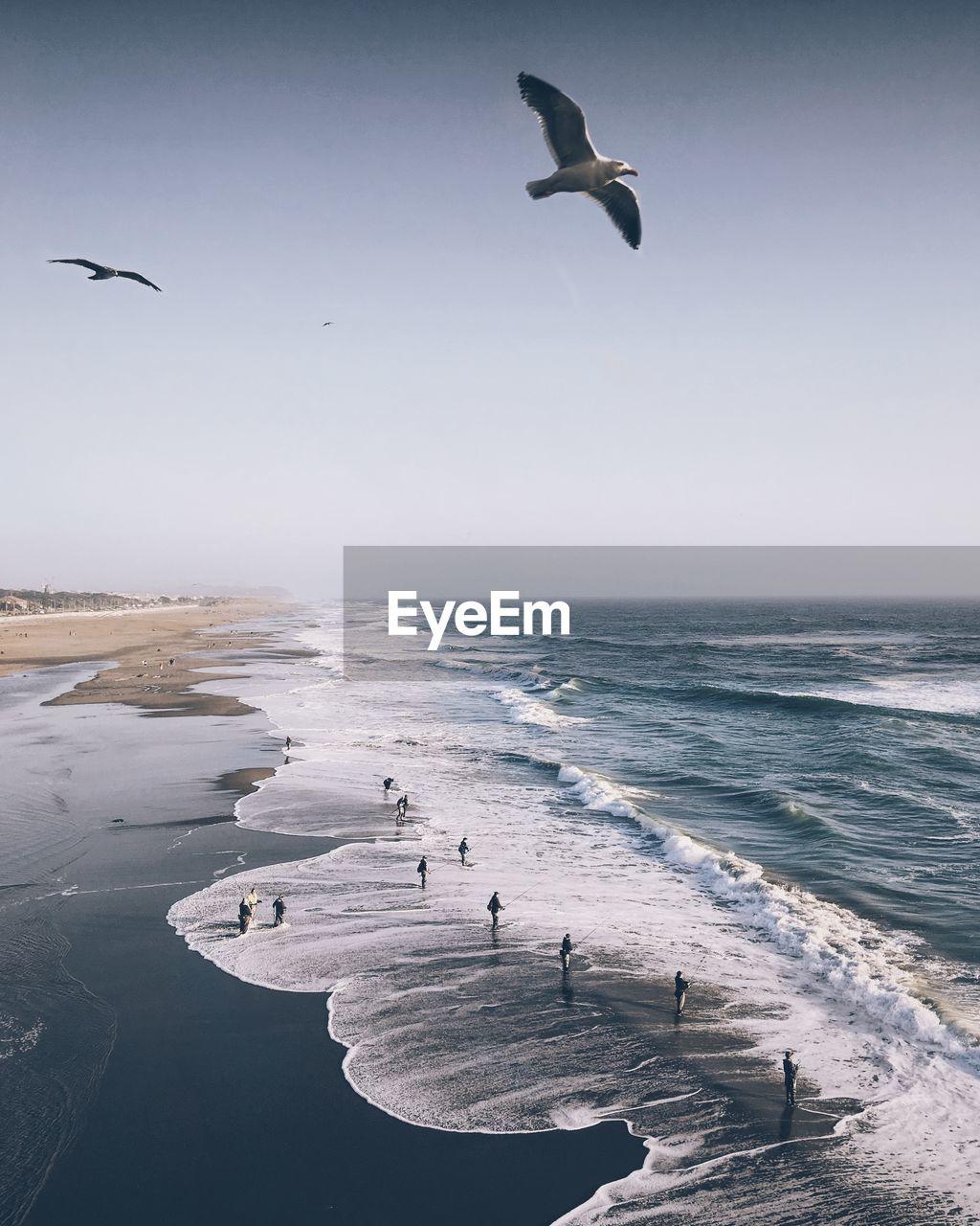 Birds Flying Over Sea At Beach