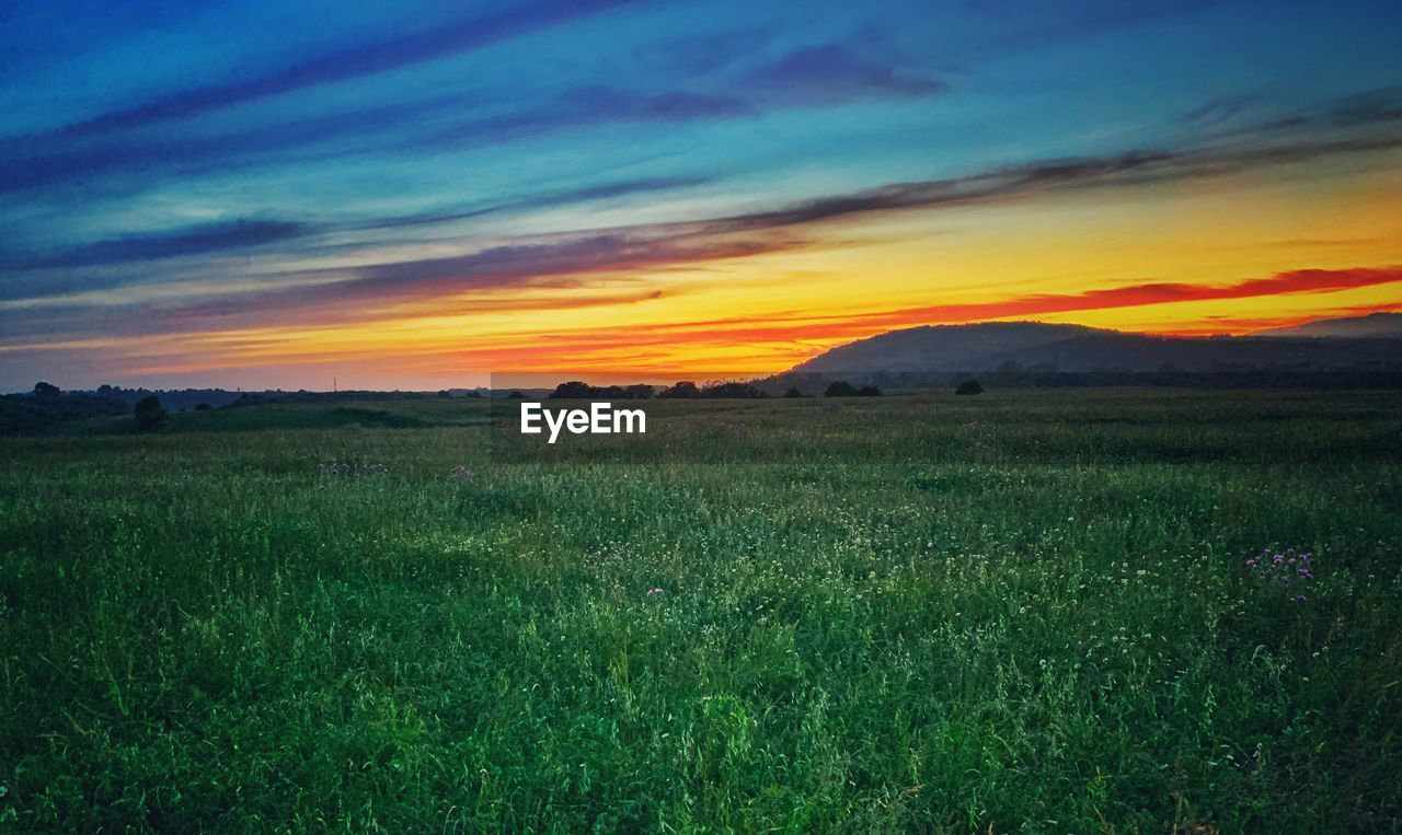 sky, environment, landscape, beauty in nature, tranquil scene, tranquility, land, scenics - nature, grass, field, sunset, nature, plant, cloud - sky, no people, growth, non-urban scene, green color, idyllic, outdoors