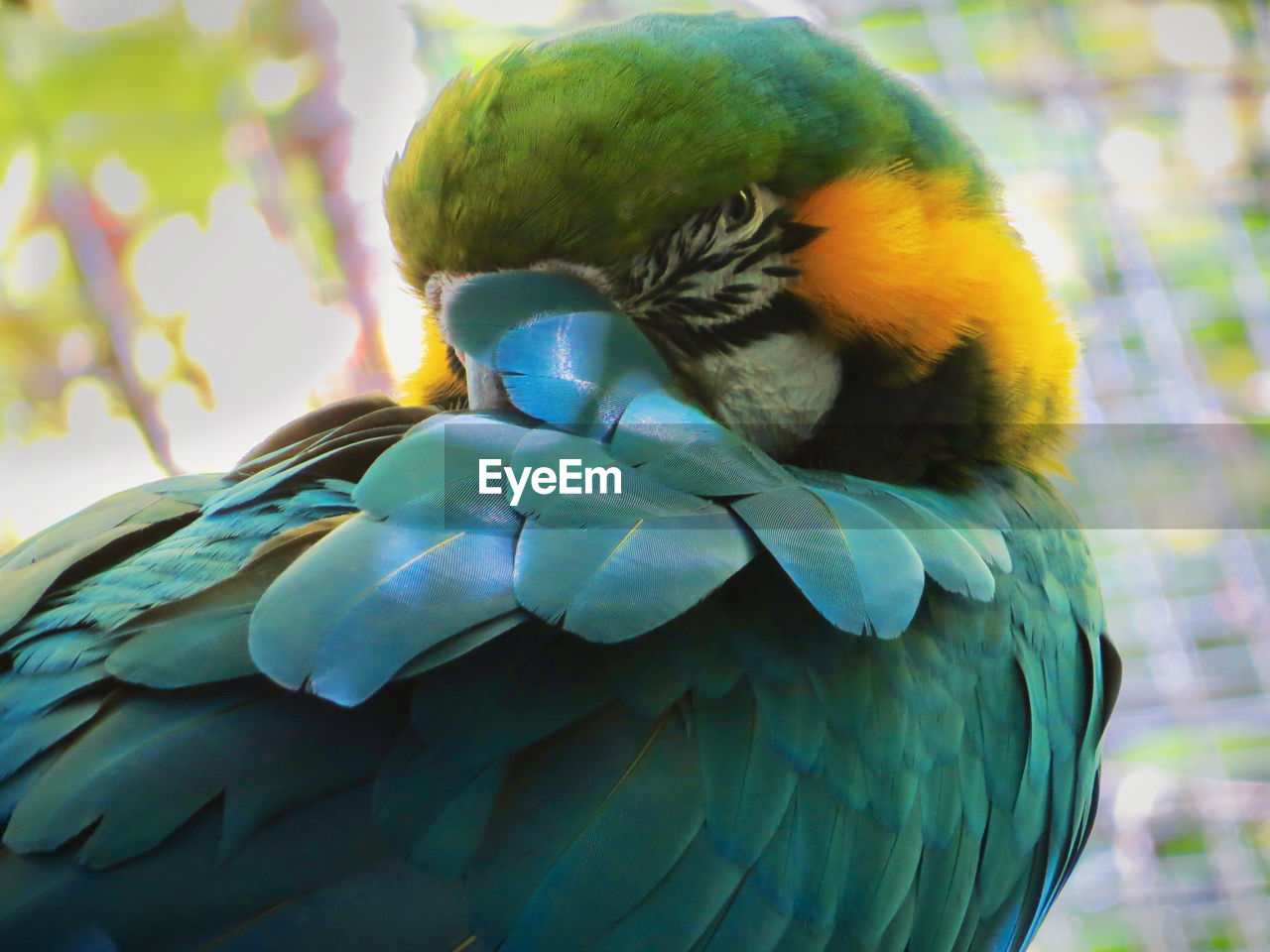 Animal Animal Themes Beak Bird Blue Cleaning Feathers Close-up Day Feather  Focus On Foreground Nature No People One Animal Outdoors Parrot