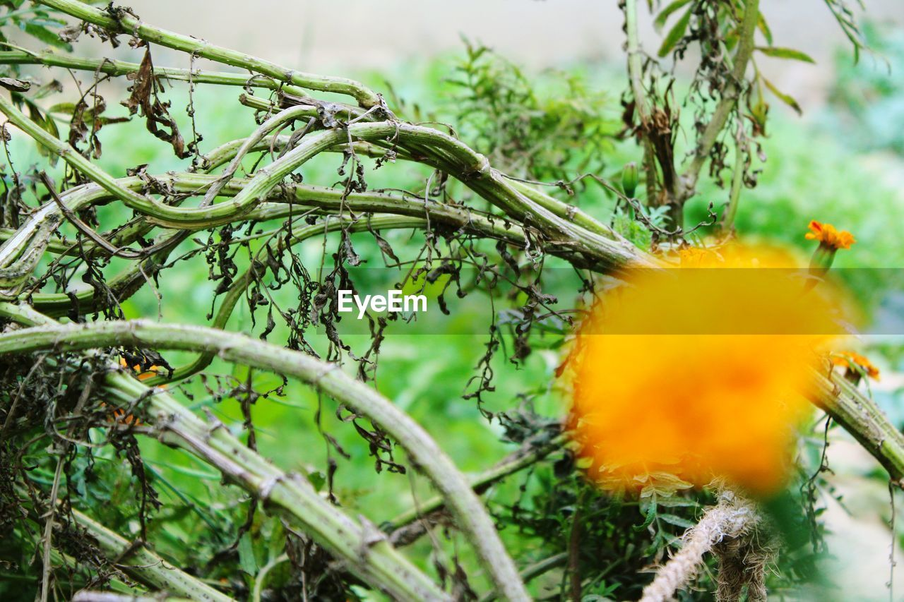 growth, flower, nature, plant, fragility, beauty in nature, outdoors, day, close-up, no people, yellow, freshness, leaf, tree, flower head
