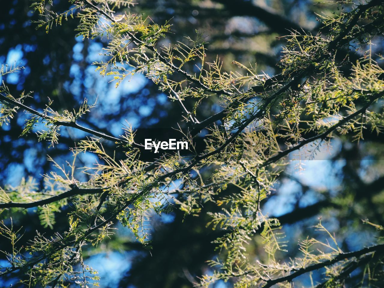 plant, tree, branch, growth, selective focus, day, nature, no people, beauty in nature, leaf, low angle view, tranquility, plant part, close-up, sunlight, green color, outdoors, cold temperature, winter, focus on foreground, lichen