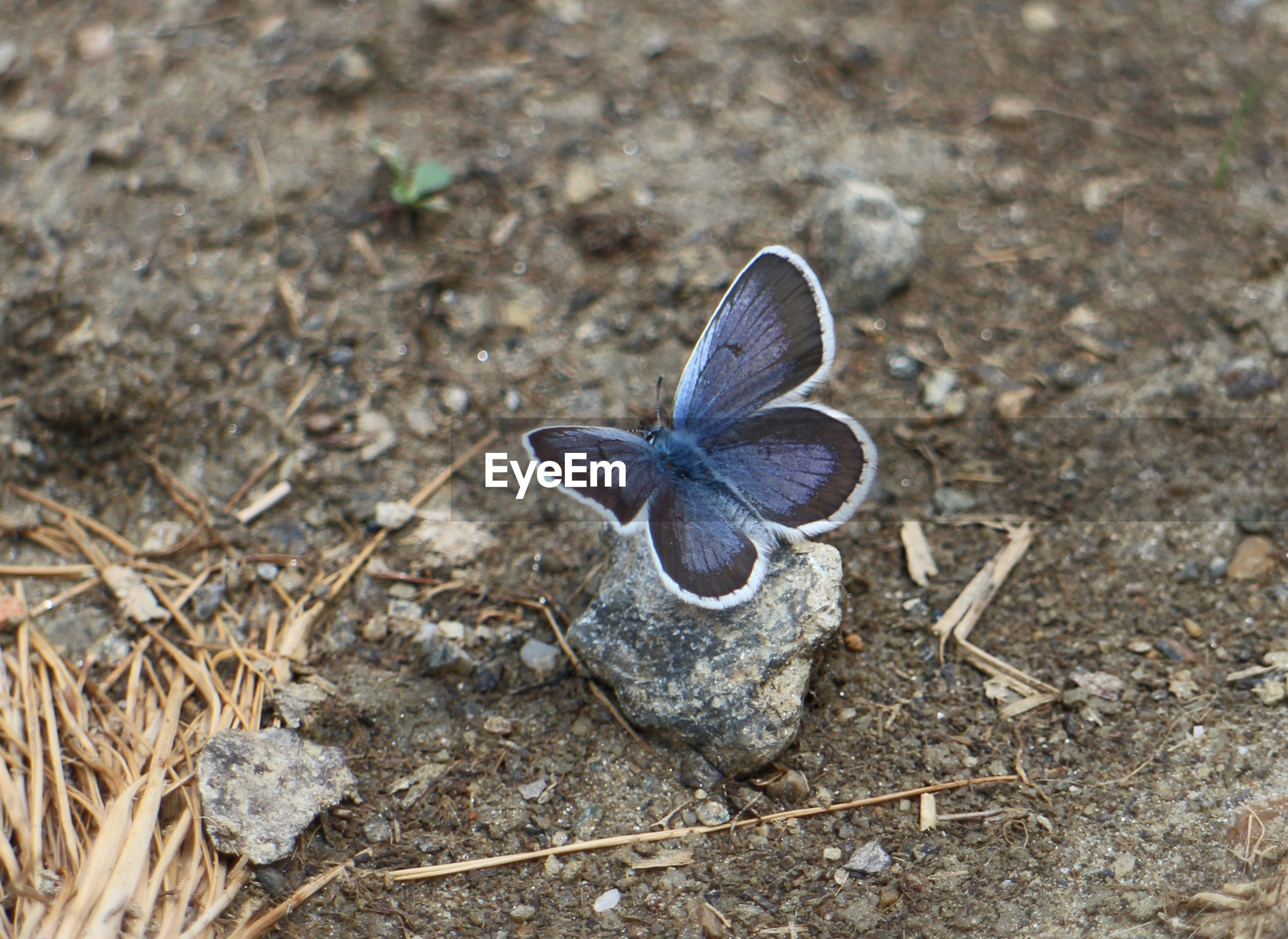 HIGH ANGLE VIEW OF BUTTERFLY ON THE GROUND