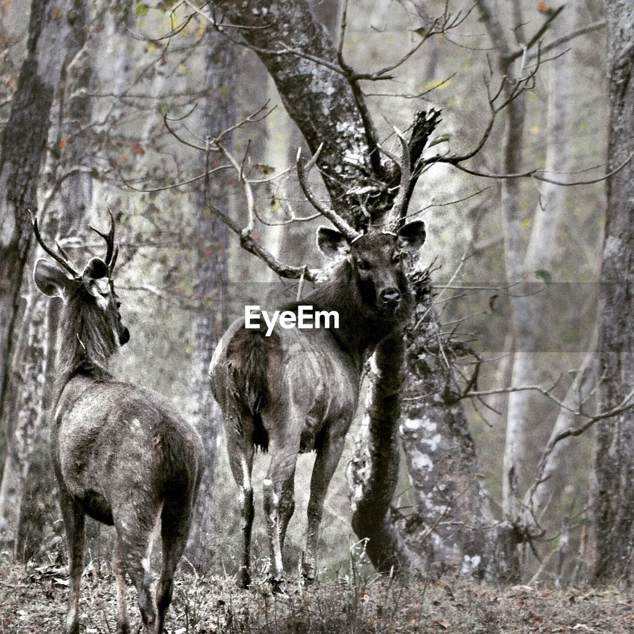 animal wildlife, animals in the wild, deer, forest, antler, tree, animal themes, outdoors, no people, day, stag, nature, mammal, moose