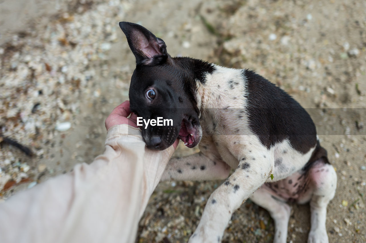 Cropped Hand Petting Dog On Field