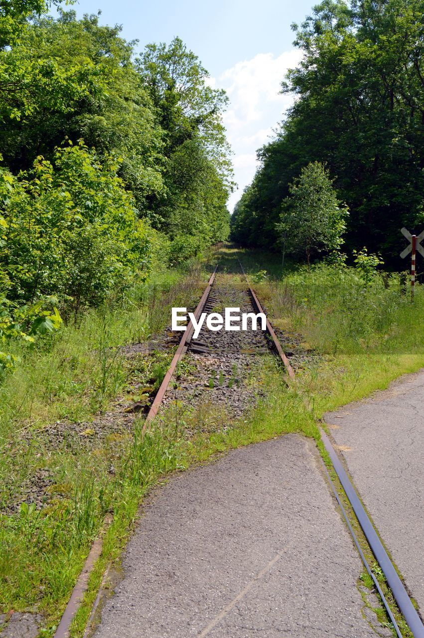 tree, no people, the way forward, green color, transportation, day, growth, rail transportation, outdoors, railroad track, nature, plant, grass, sky