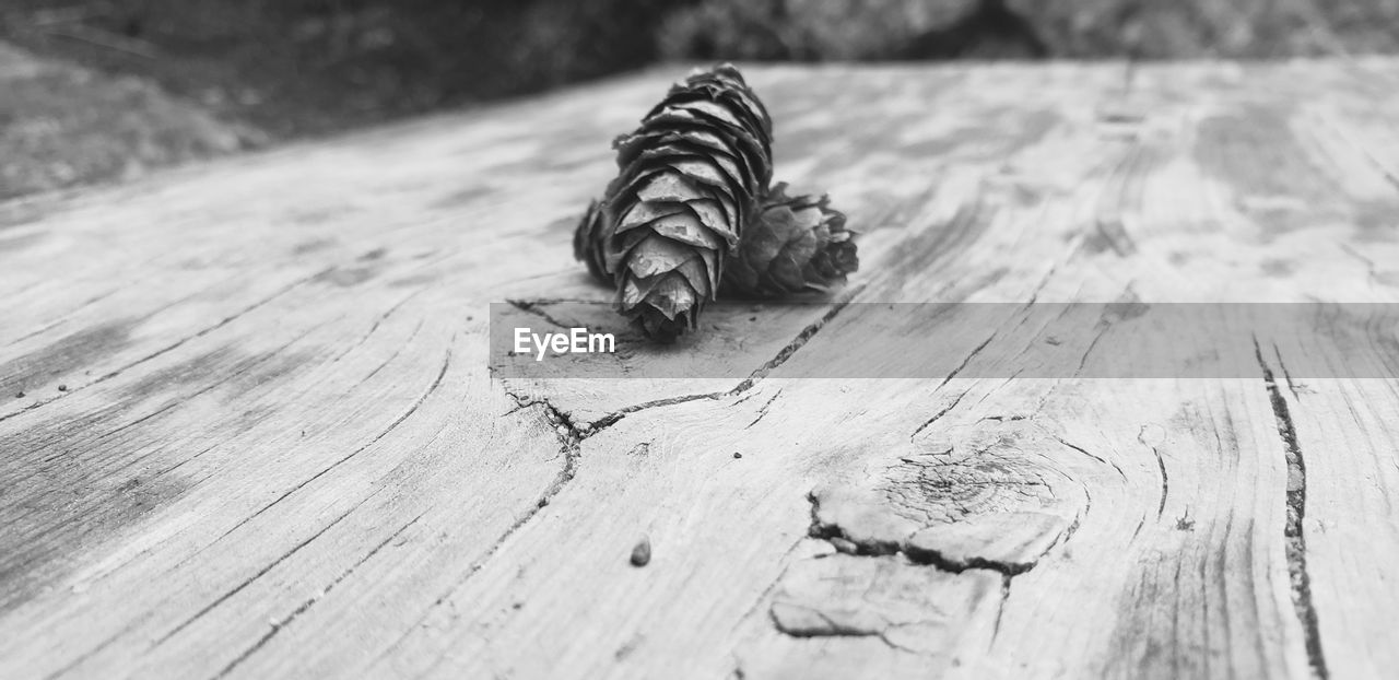 wood - material, no people, textured, close-up, one animal, selective focus, animal themes, animal, animal wildlife, day, animals in the wild, pattern, wood, nature, focus on foreground, table, outdoors, plank, invertebrate, high angle view