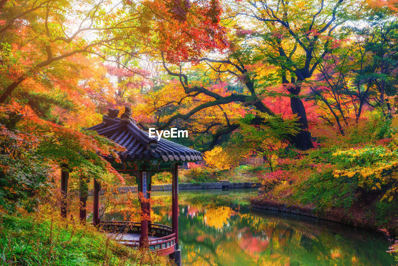 autumn, tree, plant, water, change, nature, lake, beauty in nature, no people, tranquility, reflection, forest, tranquil scene, orange color, day, park, architecture, land, outdoors, autumn collection, maple leaf