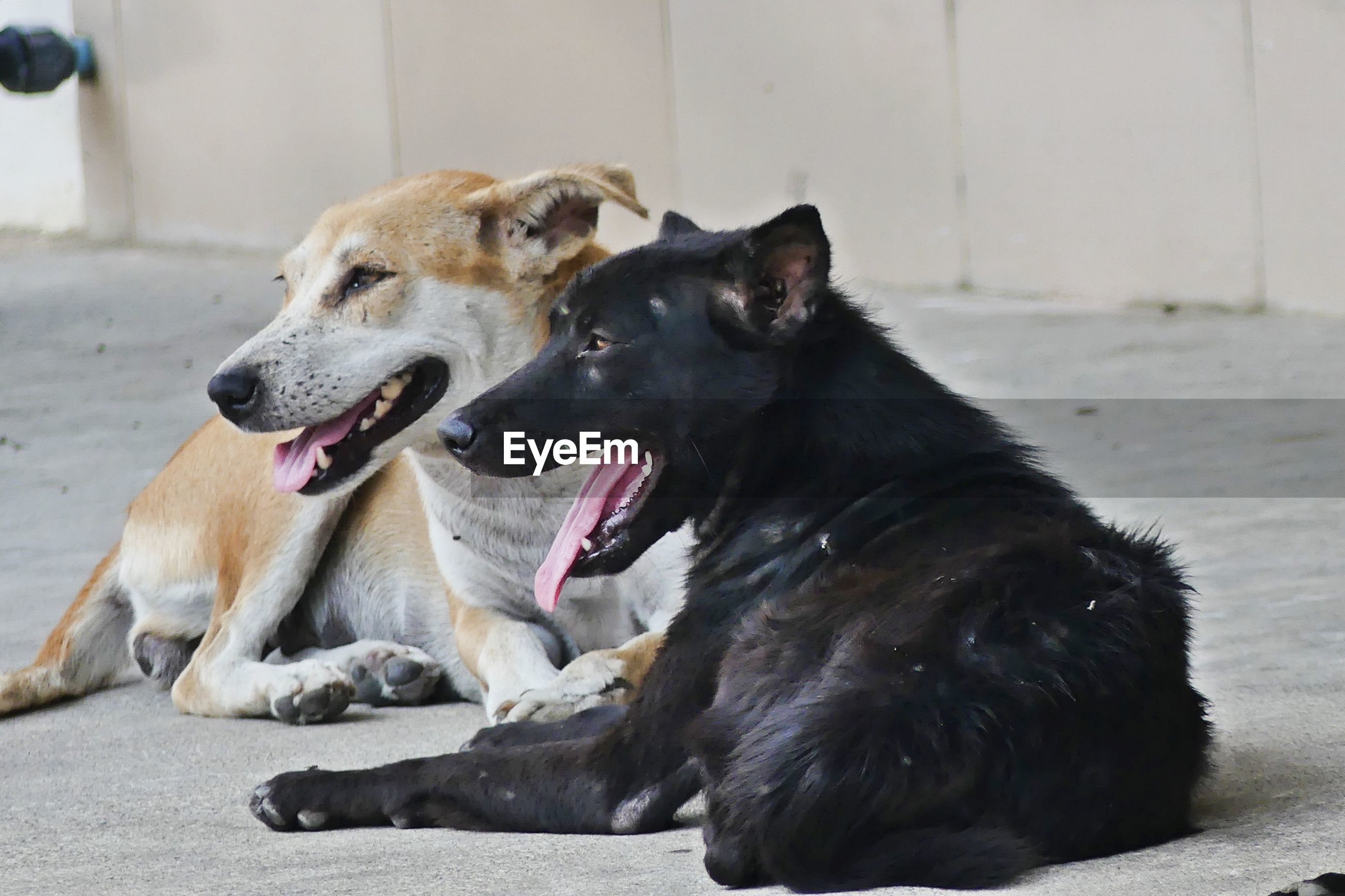 DOG SITTING OUTDOORS