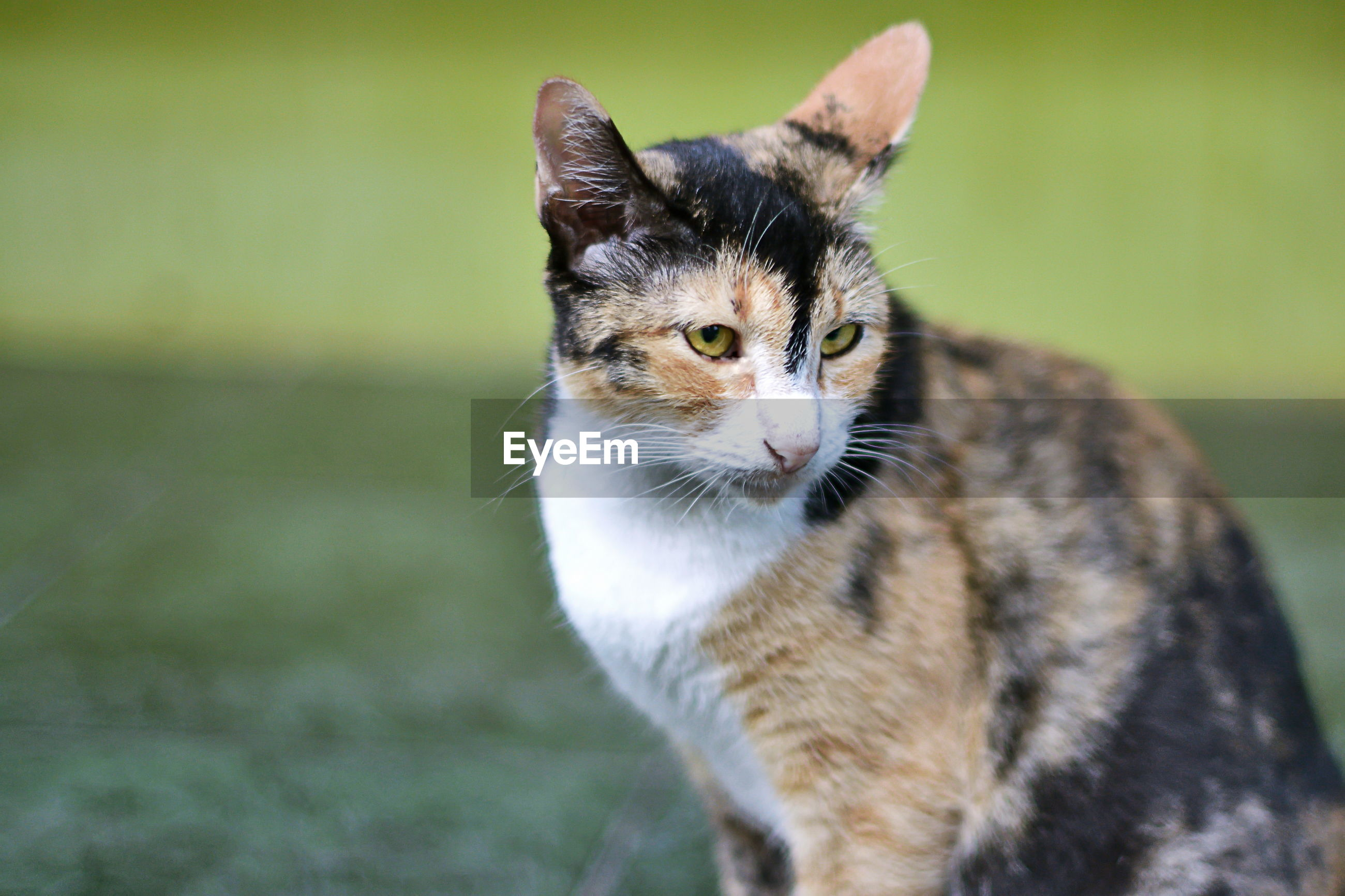 Close-up of cat sitting on field
