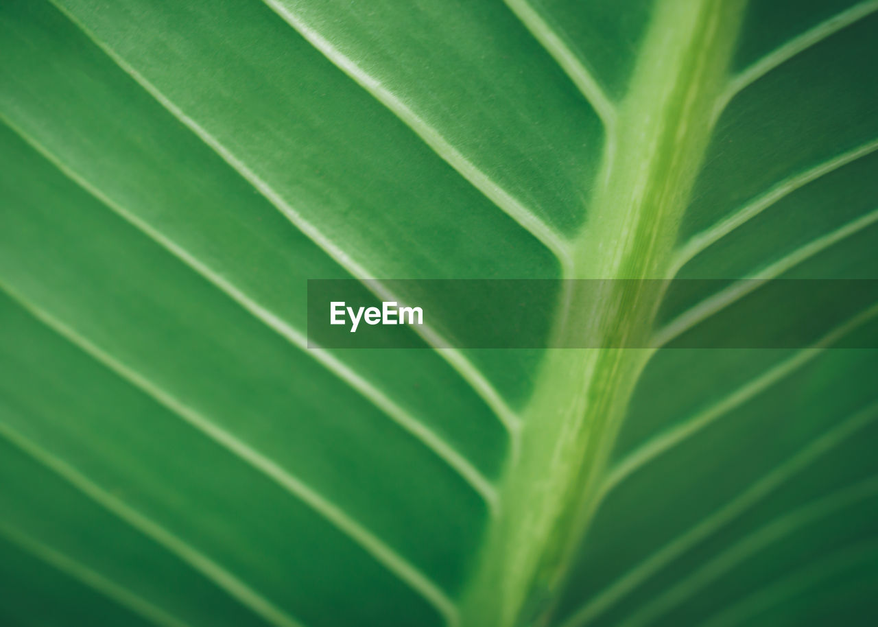 green color, leaf, plant part, full frame, backgrounds, plant, no people, close-up, growth, nature, beauty in nature, pattern, natural pattern, freshness, day, outdoors, leaf vein, textured, leaves, selective focus, palm leaf