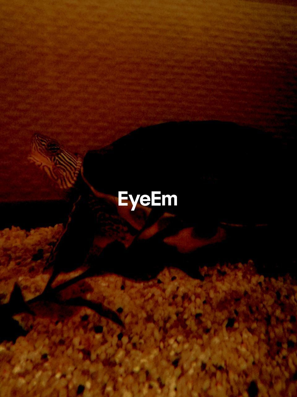 one animal, animal themes, animals in the wild, insect, animal wildlife, nature, no people, reptile, close-up, indoors, night, bird, mammal