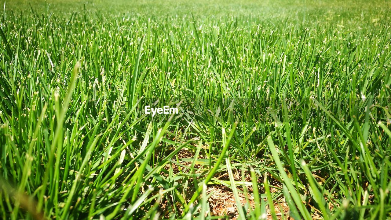 plant, field, green color, land, grass, growth, nature, beauty in nature, agriculture, day, landscape, full frame, rural scene, tranquility, backgrounds, outdoors, crop, no people, farm, high angle view, blade of grass