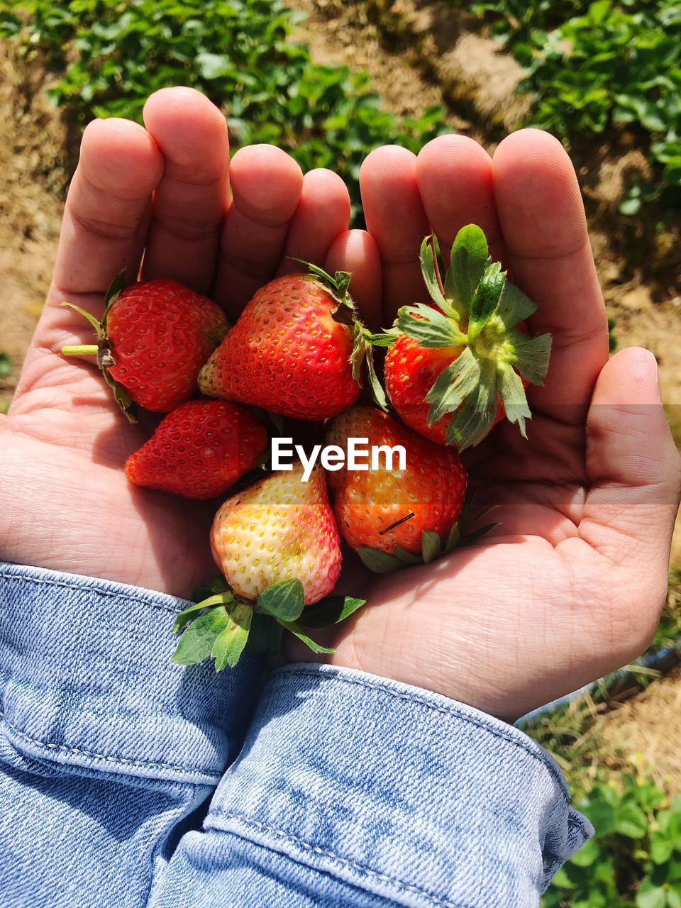 human body part, human hand, fruit, healthy eating, hand, food, real people, food and drink, wellbeing, one person, holding, freshness, unrecognizable person, personal perspective, body part, lifestyles, red, human finger, day, finger, ripe, jeans, human limb