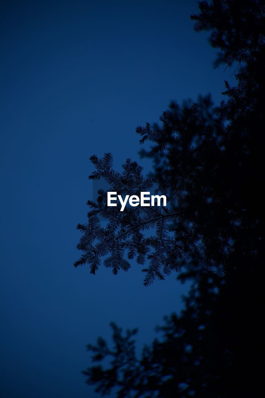 tree, plant, sky, low angle view, growth, beauty in nature, tranquility, silhouette, no people, nature, night, blue, clear sky, branch, tranquil scene, outdoors, scenics - nature, moon, dusk, moonlight