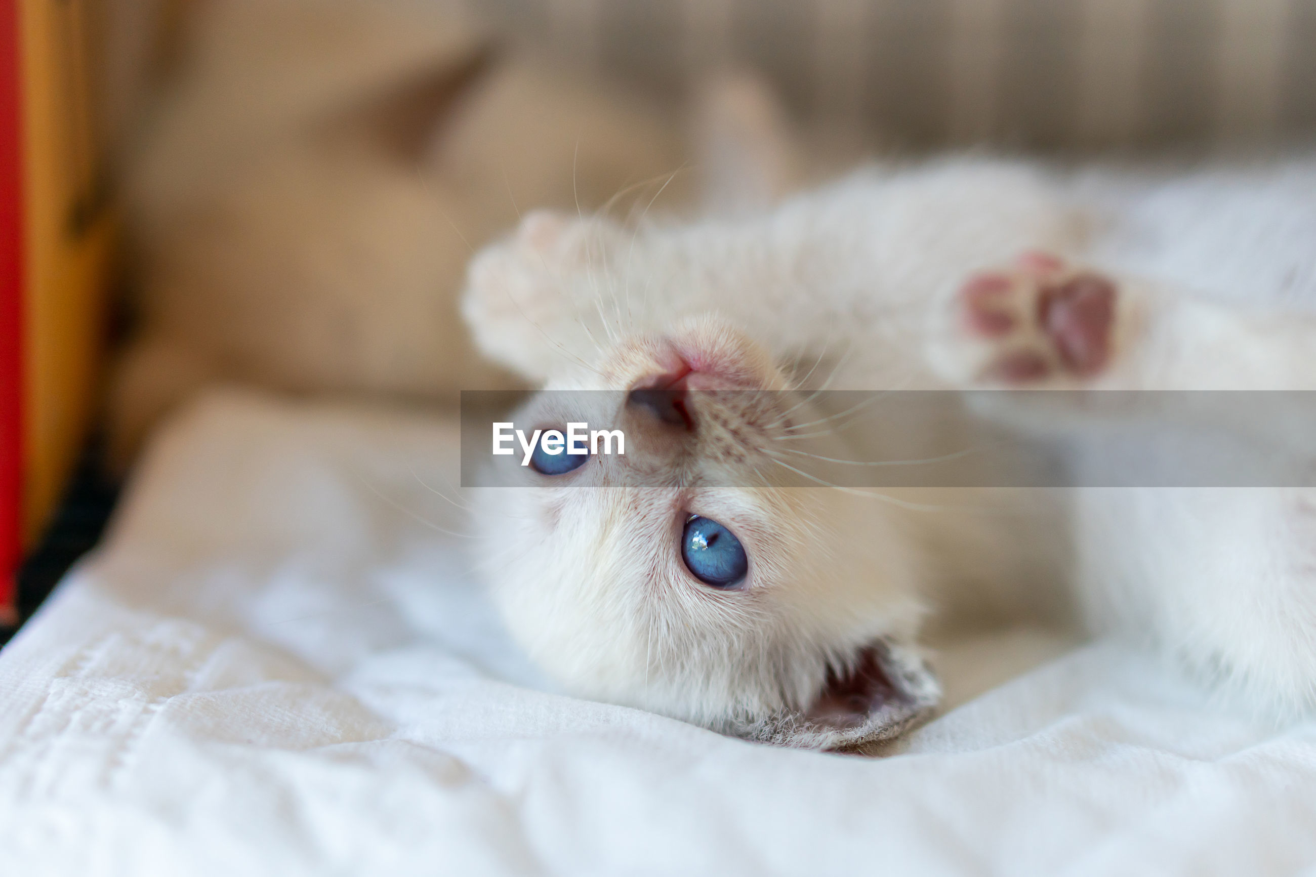 Close-up of kitten looking away on bed