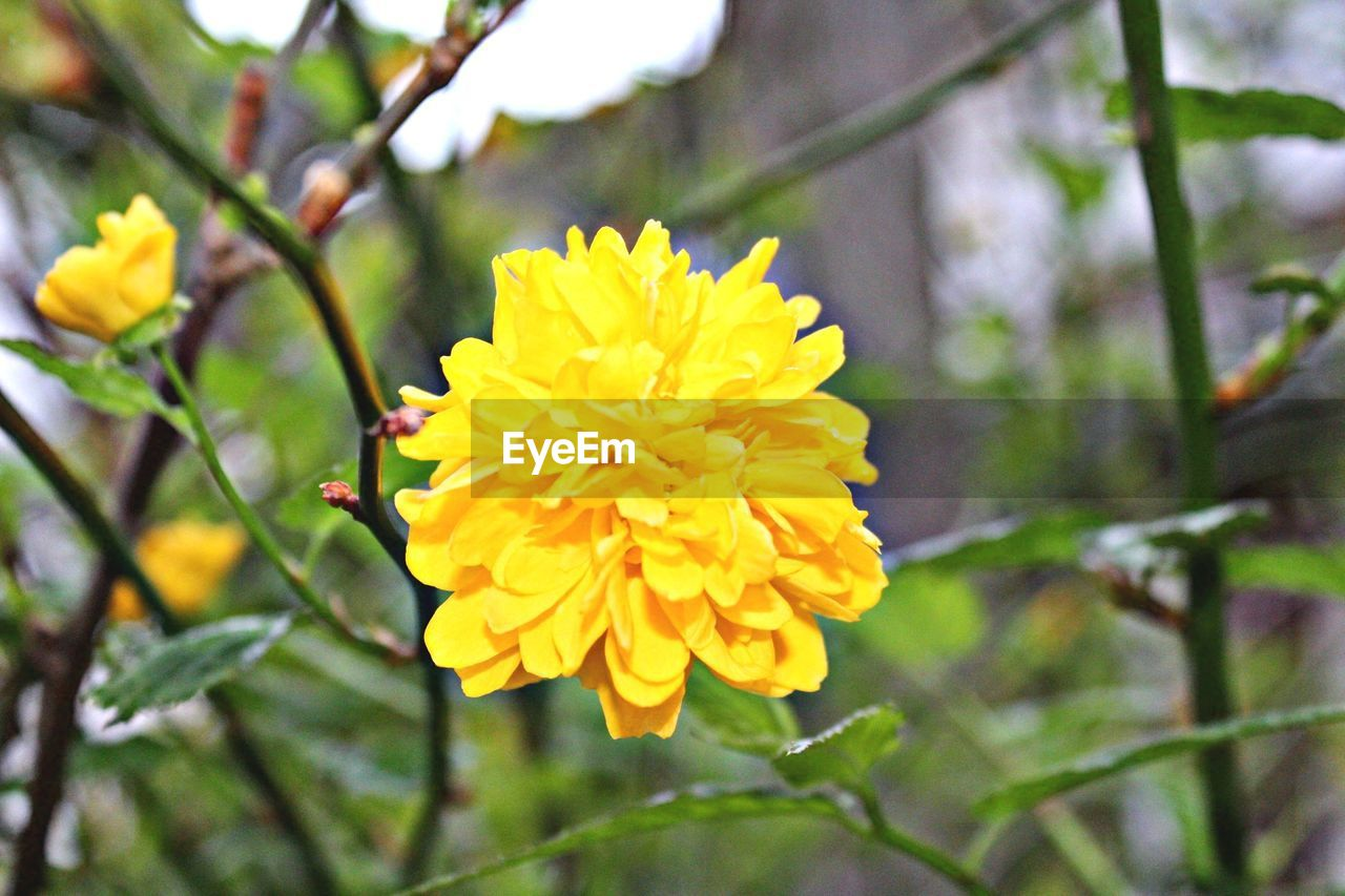 flower, fragility, petal, freshness, beauty in nature, growth, nature, yellow, flower head, blooming, close-up, focus on foreground, outdoors, plant, day, no people, springtime