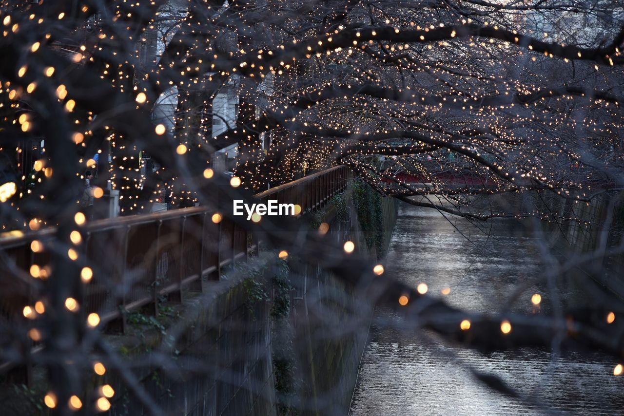 Illuminated Christmas Tree In City At Night