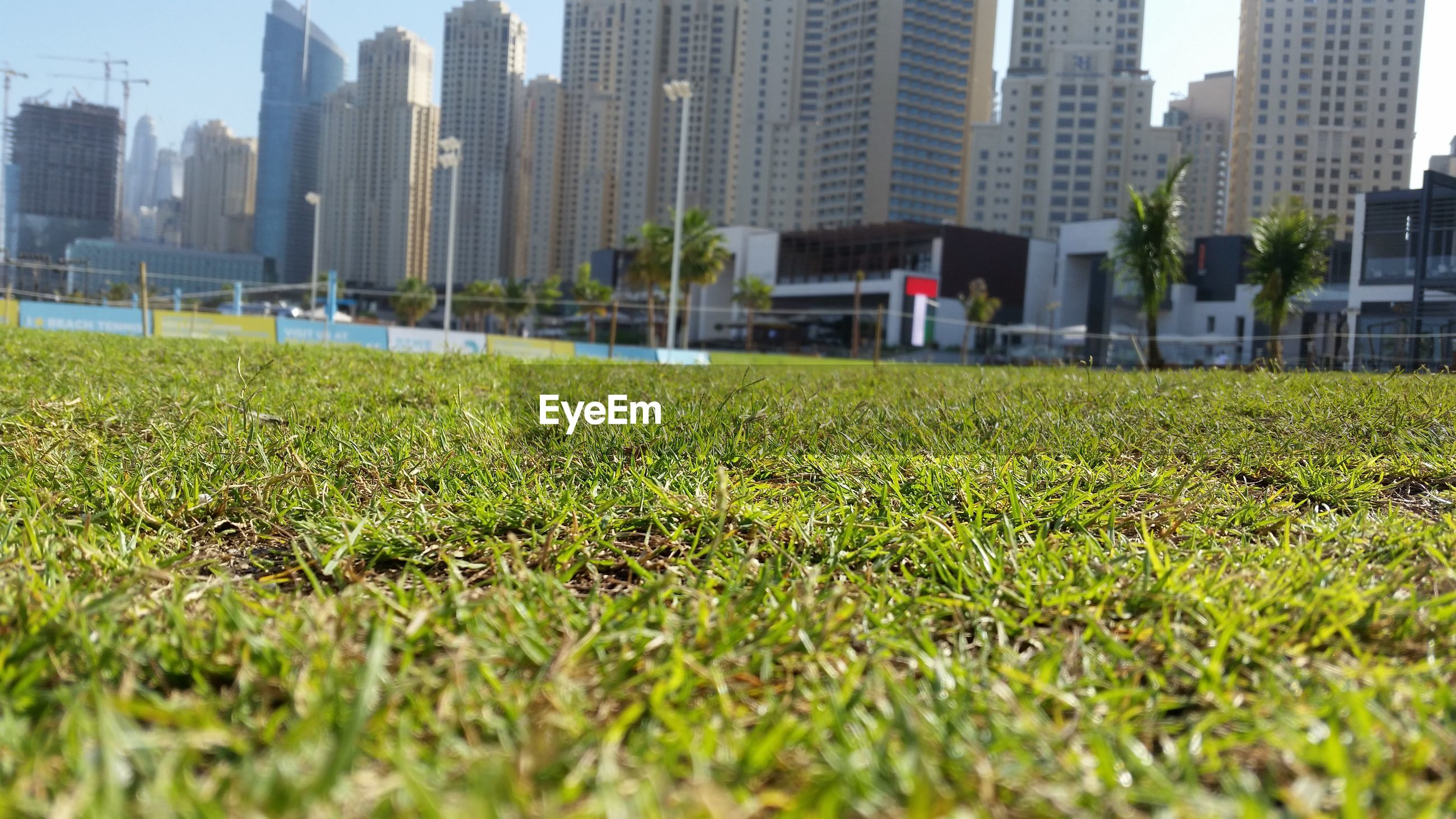building exterior, architecture, built structure, grass, city, growth, green color, selective focus, lawn, surface level, building, field, plant, day, focus on background, incidental people, outdoors, focus on foreground, transportation, city life