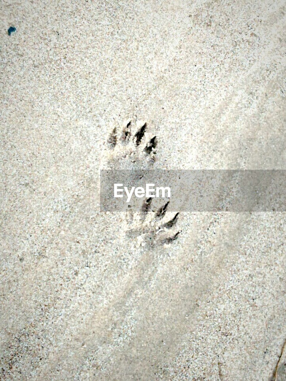 footprint, animal track, paw print, track - imprint, sand, day, outdoors, high angle view, no people, close-up, animal themes, nature