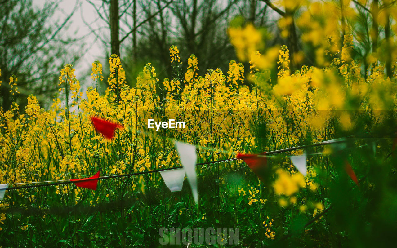 yellow, flower, nature, growth, beauty in nature, plant, field, oilseed rape, fragility, day, outdoors, no people, agriculture, freshness, tree, tranquility, blooming, mustard plant, flower head