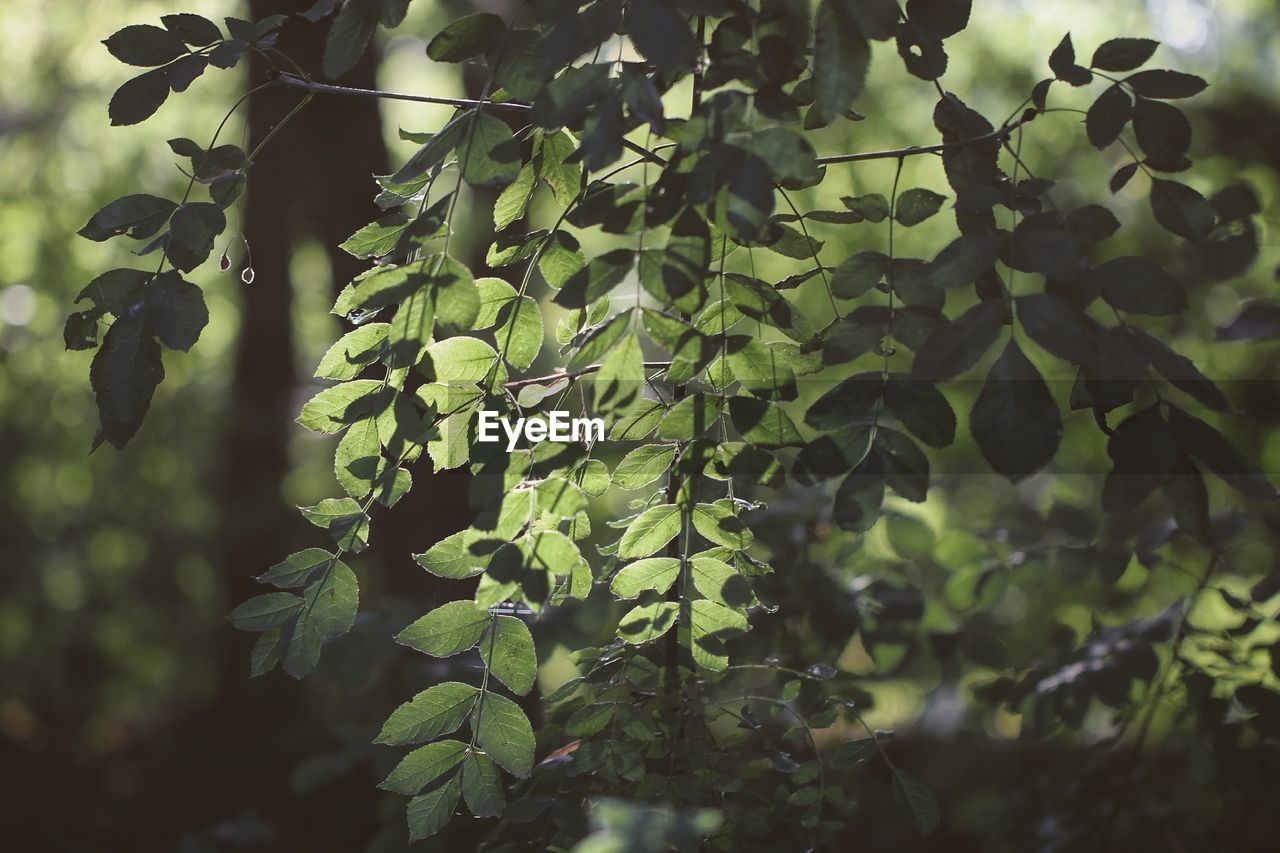 growth, leaf, plant, nature, green color, tree, beauty in nature, outdoors, day, no people, tranquility, close-up, freshness, fragility