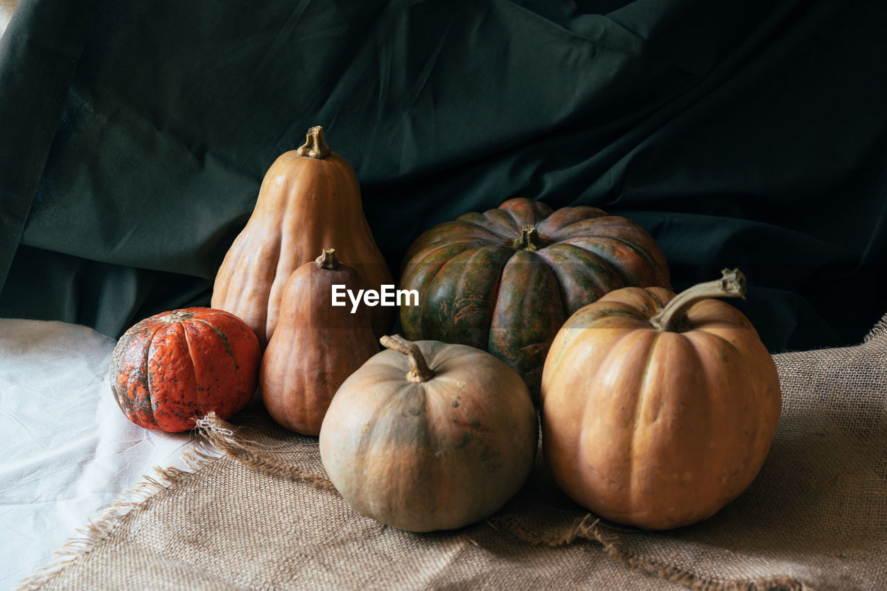 A still life with large autumn pumpkins on dark natural draperies. festive thanksgiving content.
