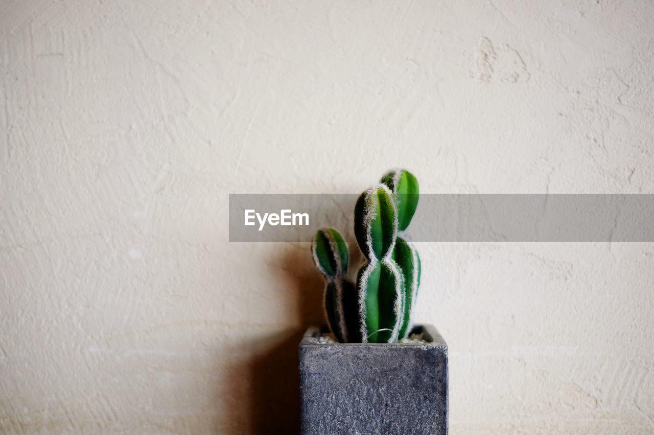 Potted Cactus Against Wall