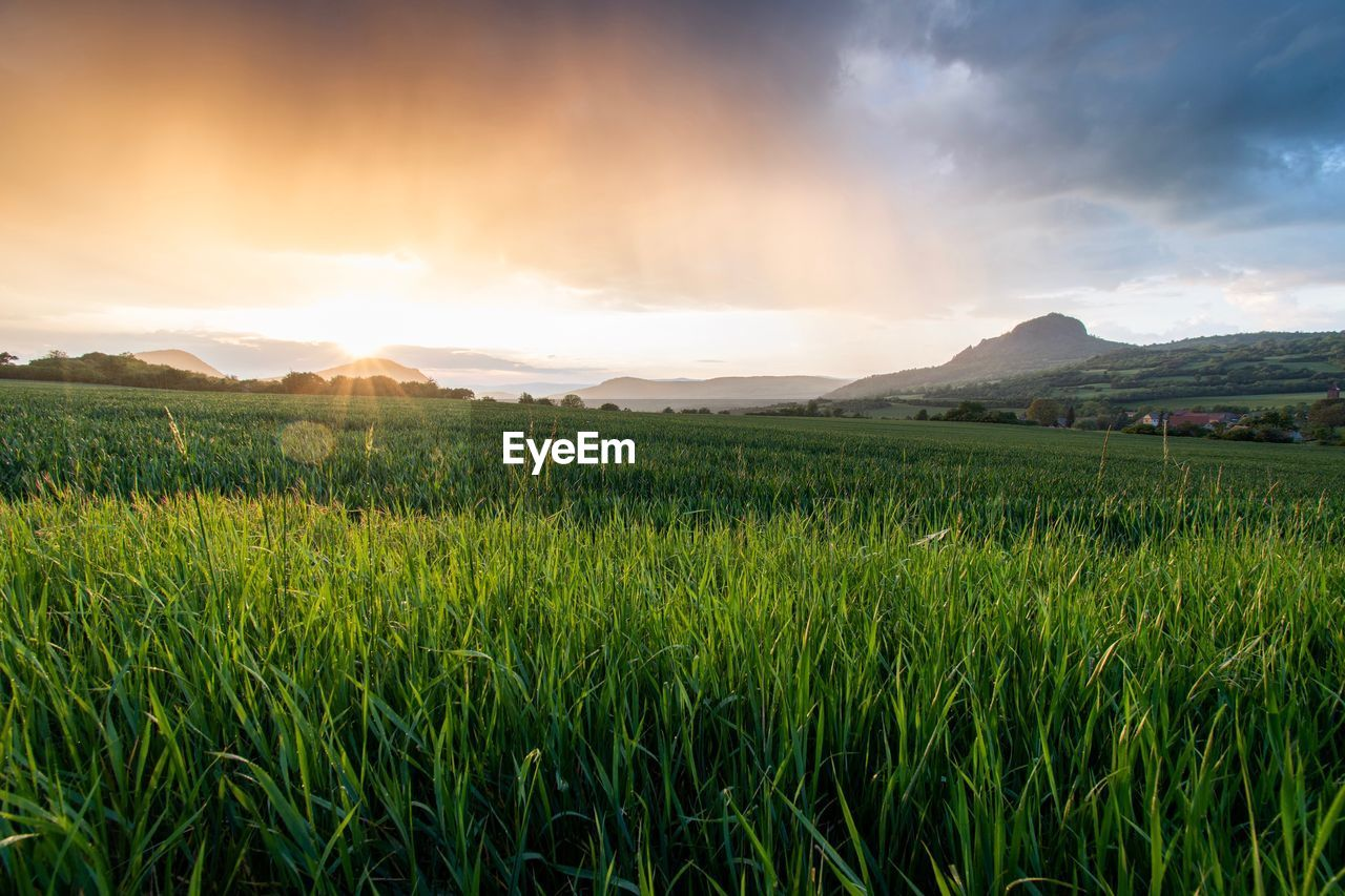 landscape, sky, scenics - nature, environment, land, tranquil scene, beauty in nature, field, tranquility, cloud - sky, mountain, plant, green color, growth, nature, grass, no people, rural scene, agriculture, crop, mountain range, outdoors