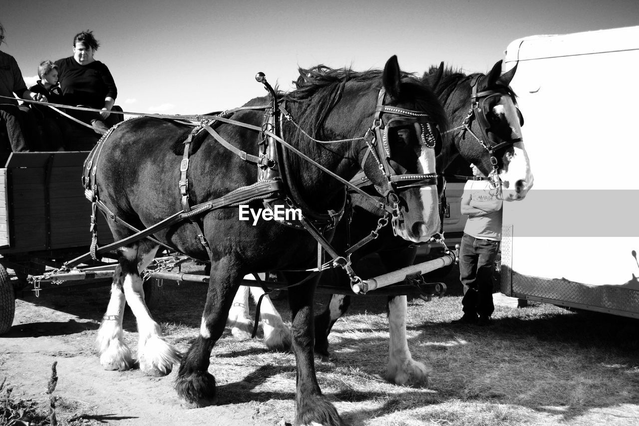 domestic animals, working animal, horse, mammal, bridle, outdoors, livestock, horsedrawn, men, real people, transportation, day, full length, horse cart, one animal, clear sky, standing, one person, sky, people