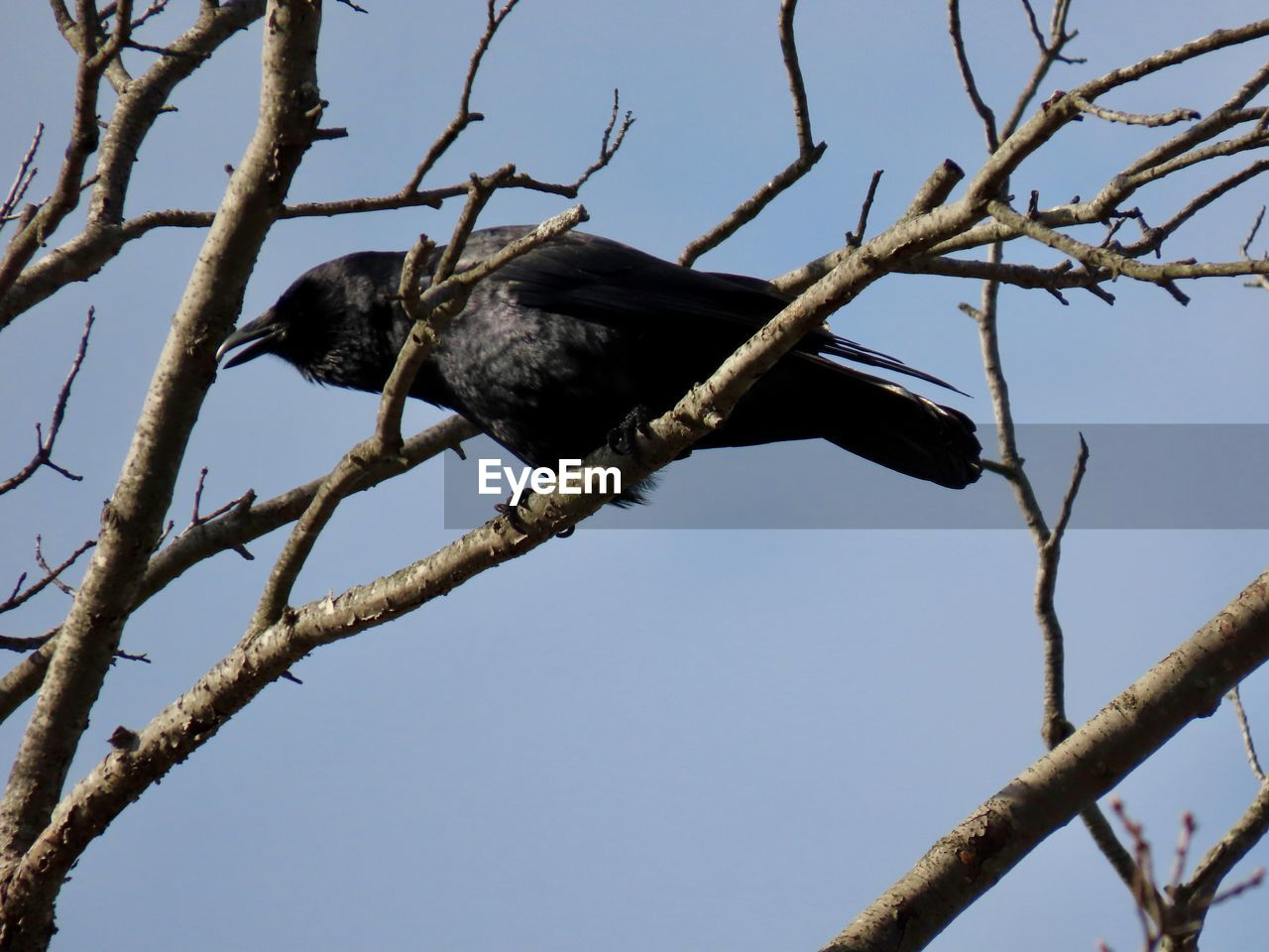 bird, animal themes, animal, branch, animal wildlife, one animal, low angle view, vertebrate, animals in the wild, tree, sky, plant, perching, nature, no people, clear sky, day, outdoors, bare tree, blue