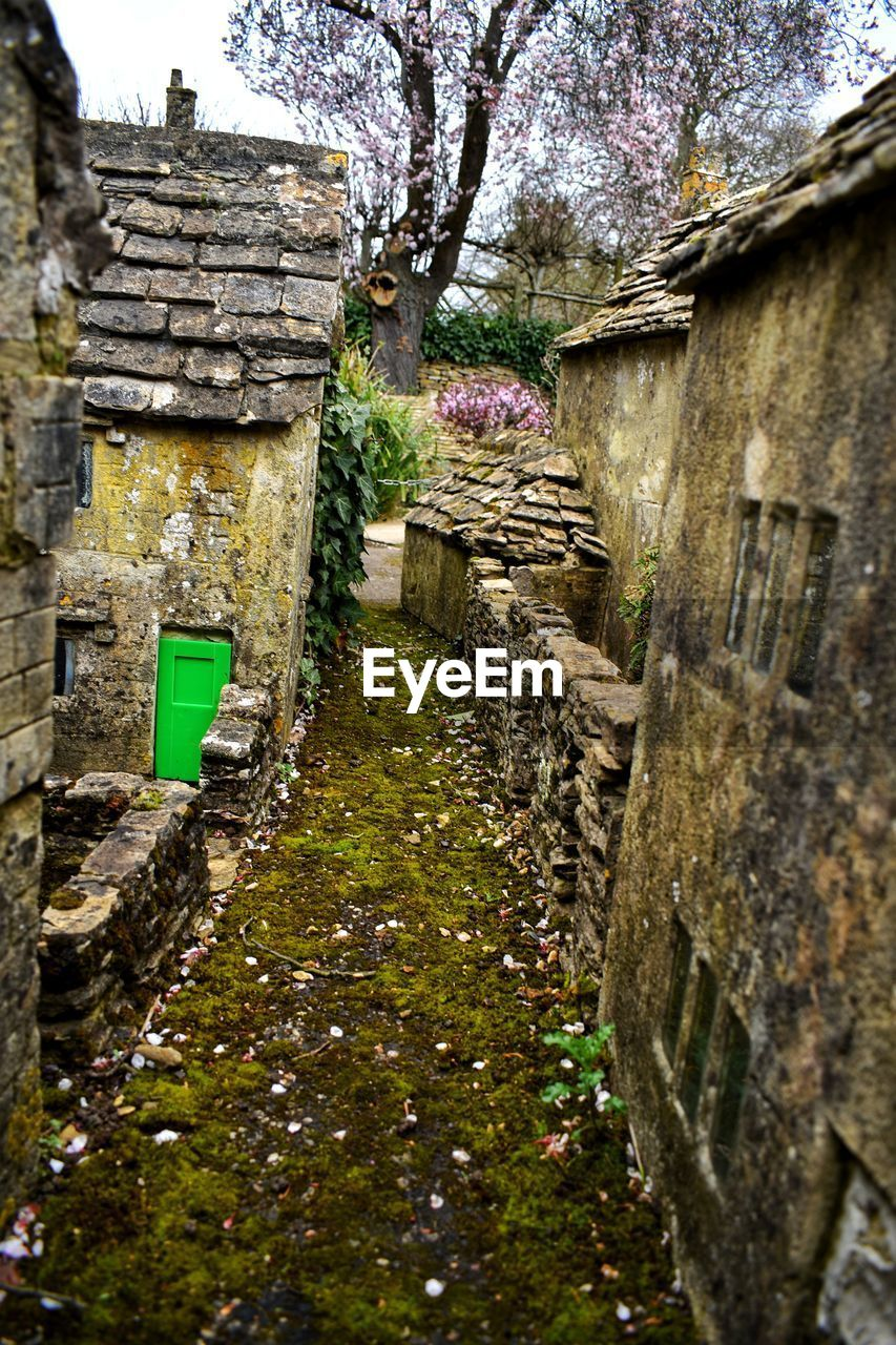 architecture, built structure, building exterior, plant, building, nature, wall, day, no people, wall - building feature, old, tree, history, outdoors, house, growth, the past, stone wall, moss, abandoned, alley