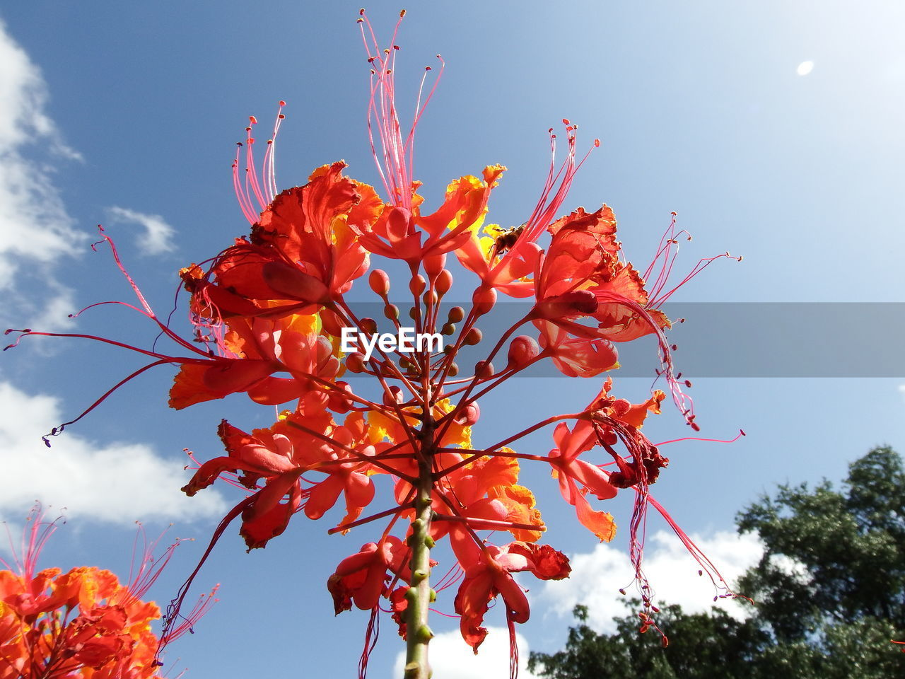 plant, sky, low angle view, beauty in nature, growth, flower, flowering plant, fragility, tree, vulnerability, nature, no people, freshness, close-up, petal, day, red, orange color, focus on foreground, outdoors, flower head, pollen, orange