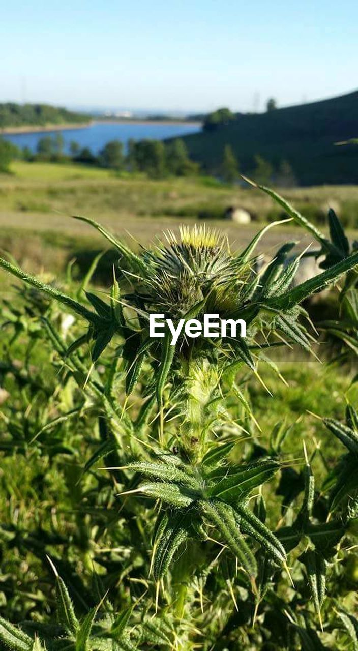 focus on foreground, growth, green color, nature, field, no people, day, outdoors, plant, close-up, beauty in nature, sky
