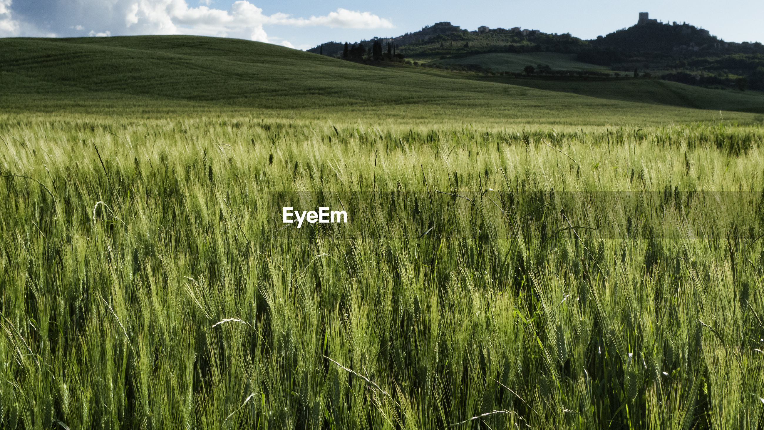 SCENIC VIEW OF FIELD