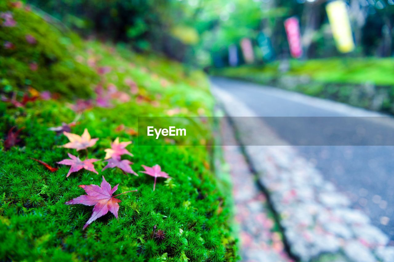 flower, growth, leaf, nature, fragility, green color, plant, outdoors, selective focus, no people, day, beauty in nature, petal, focus on foreground, close-up, freshness, grass, flower head