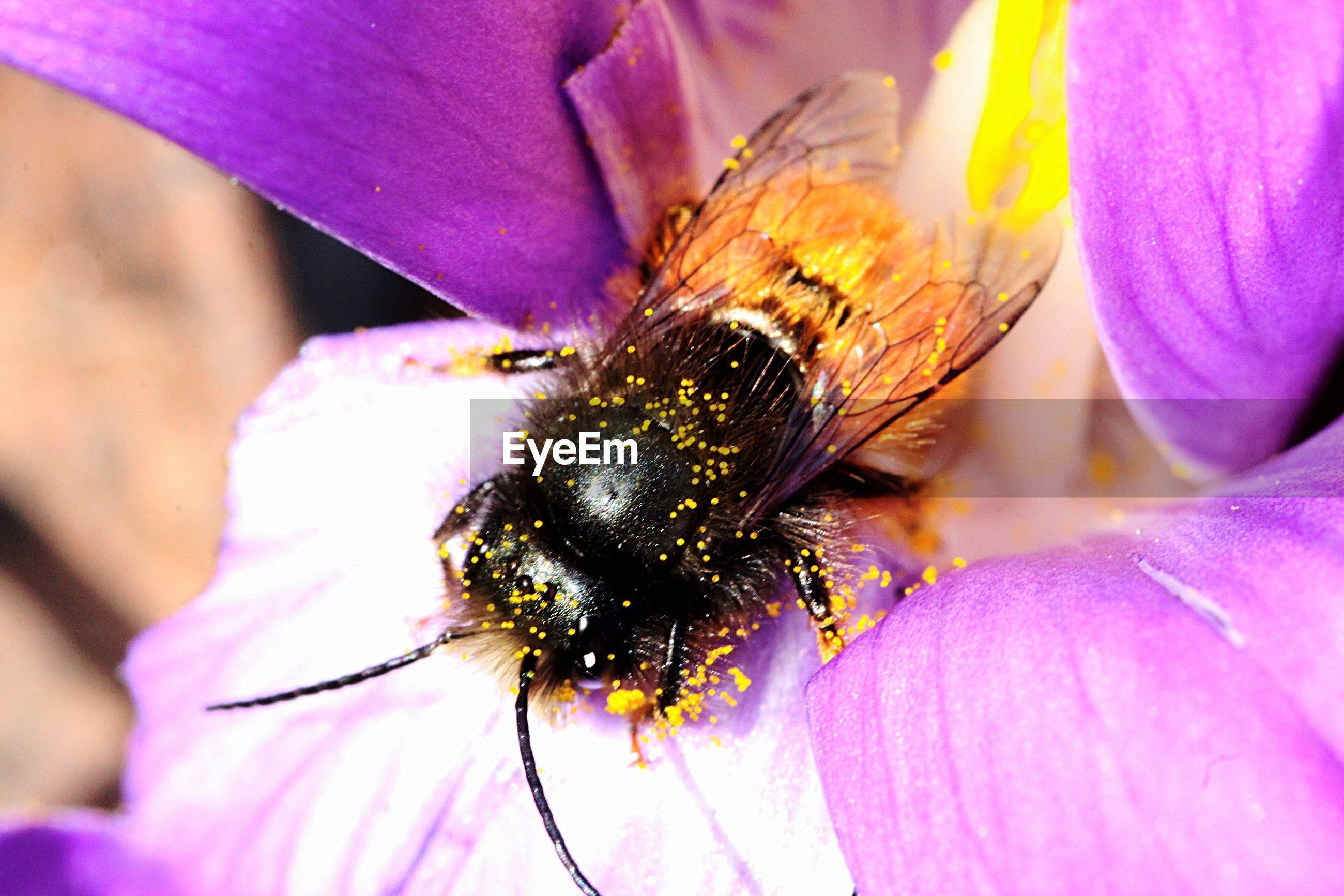 Macro shot of honey bee on pink flower