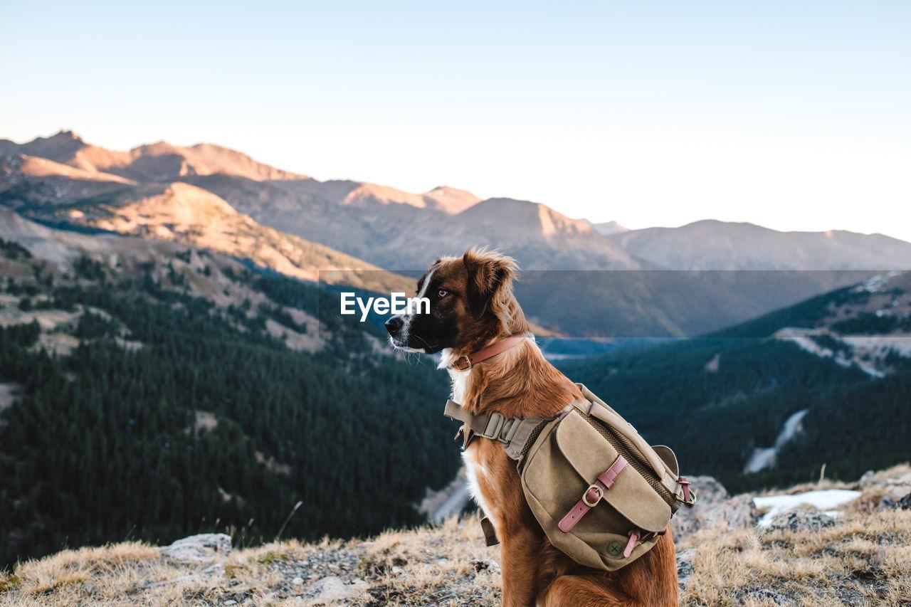 DOG LOOKING AT MOUNTAIN RANGE