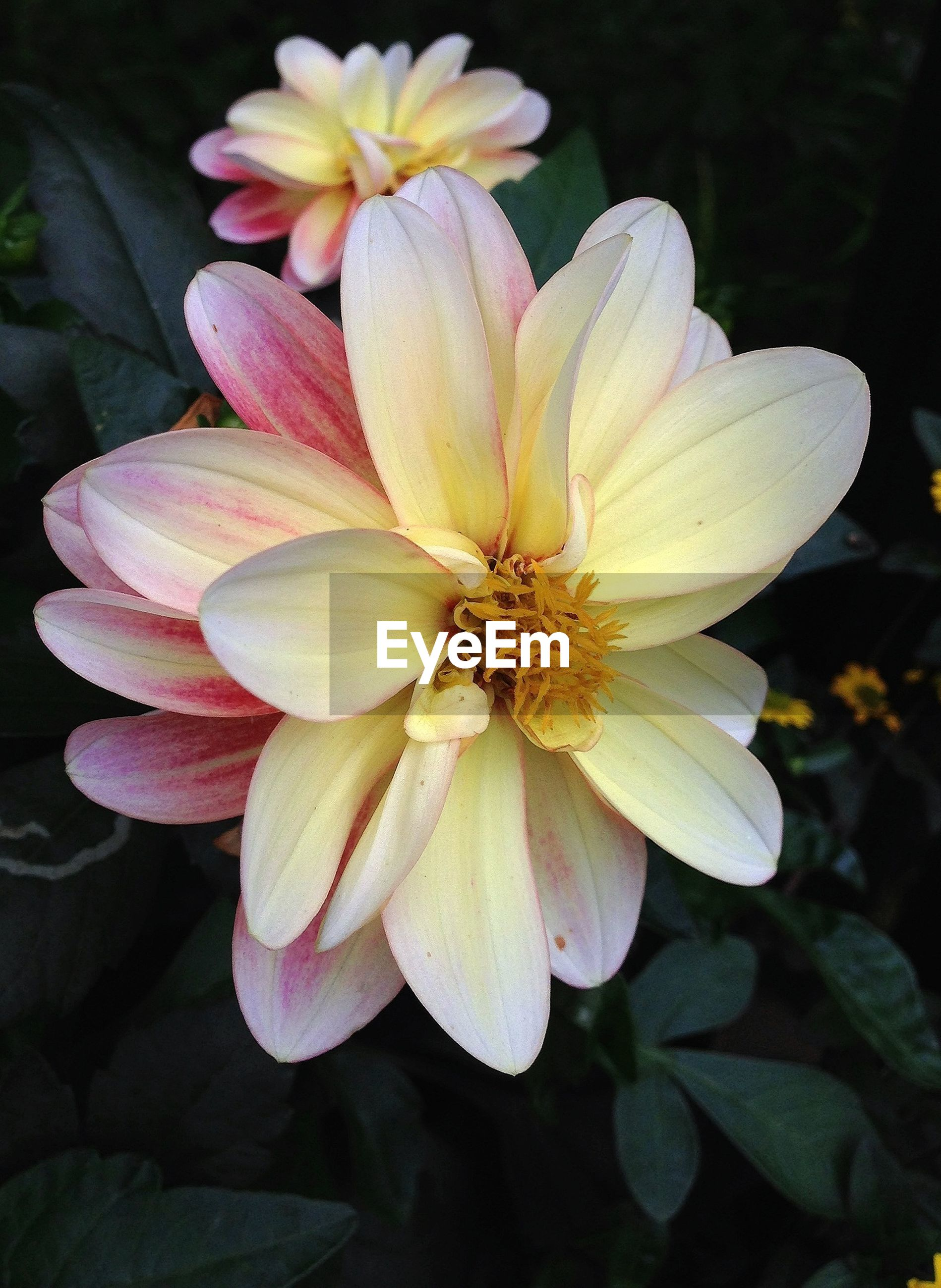 Close-up of flower in park
