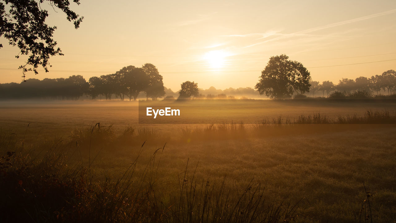 tranquility, tranquil scene, sky, beauty in nature, tree, scenics - nature, plant, fog, sunset, nature, landscape, water, no people, non-urban scene, sun, field, idyllic, land, outdoors, hazy