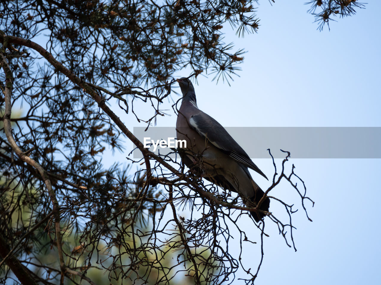 tree, bird, animals in the wild, animal themes, sky, animal wildlife, animal, plant, low angle view, vertebrate, branch, one animal, nature, perching, no people, clear sky, day, outdoors, bare tree, growth