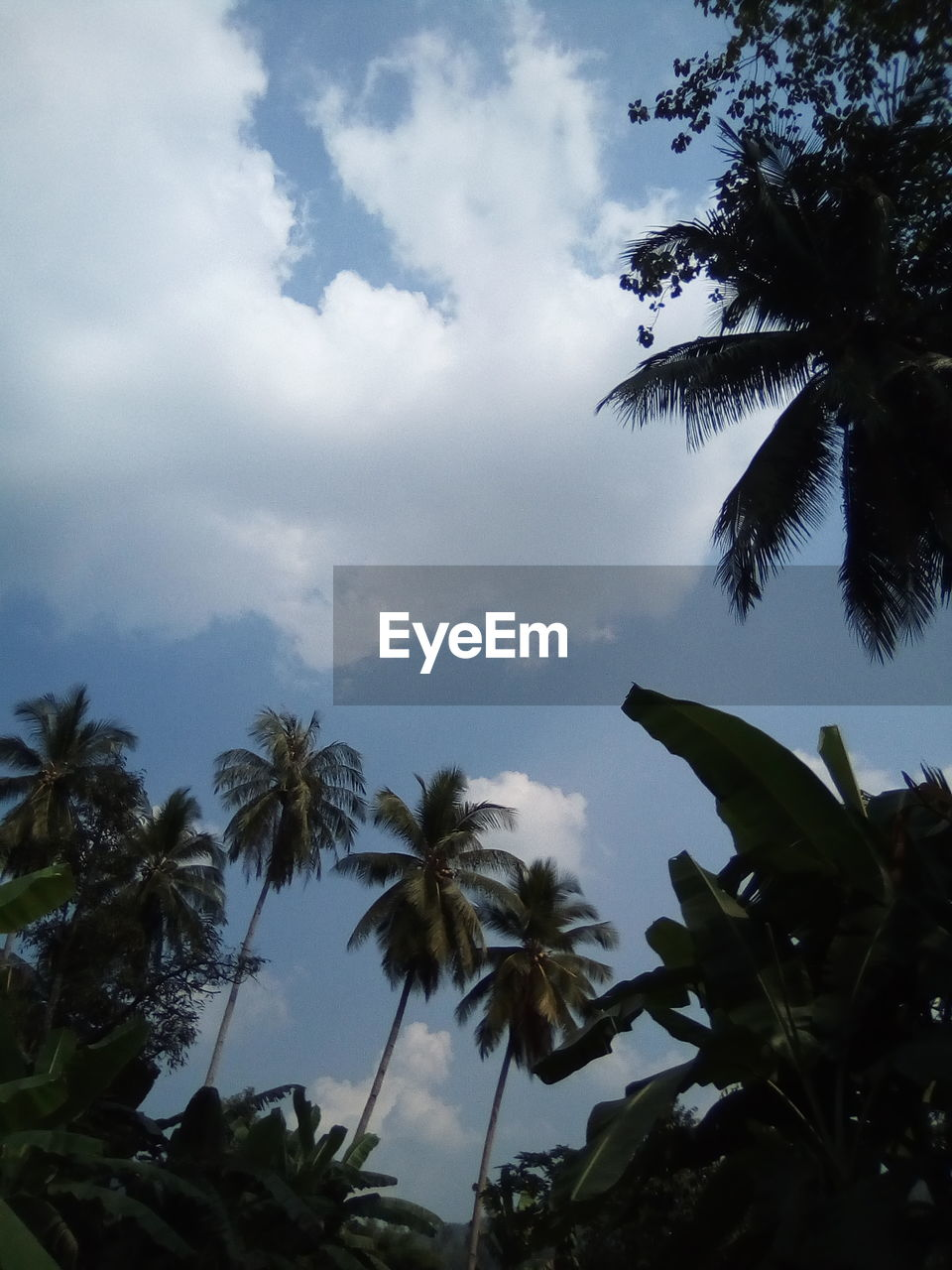 sky, palm tree, tropical climate, cloud - sky, low angle view, plant, tree, growth, beauty in nature, nature, leaf, tranquility, no people, day, plant part, outdoors, tranquil scene, silhouette, scenics - nature, coconut palm tree, tropical tree, palm leaf